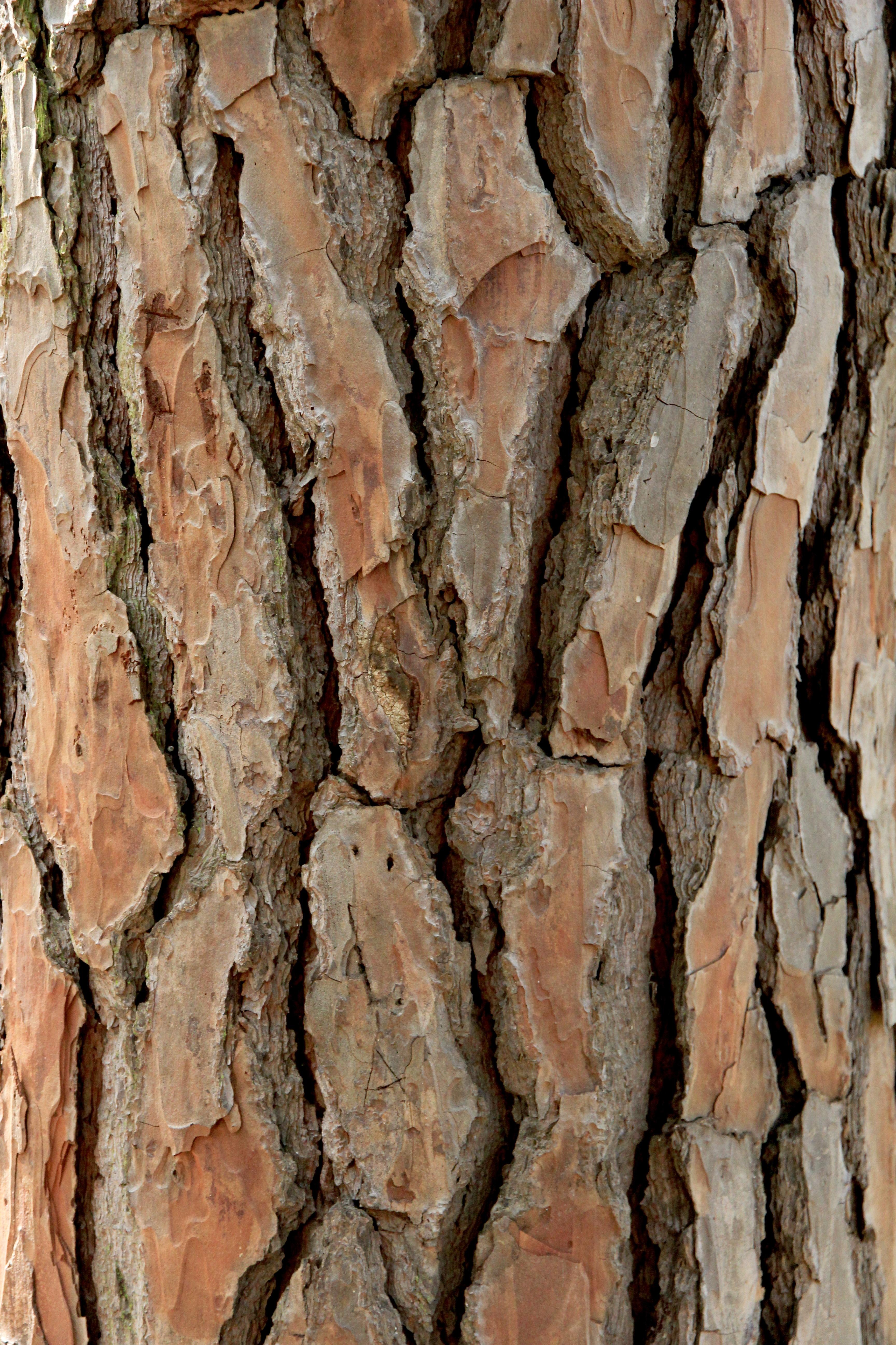 images gratuites arbre branche bois texture feuille. Black Bedroom Furniture Sets. Home Design Ideas