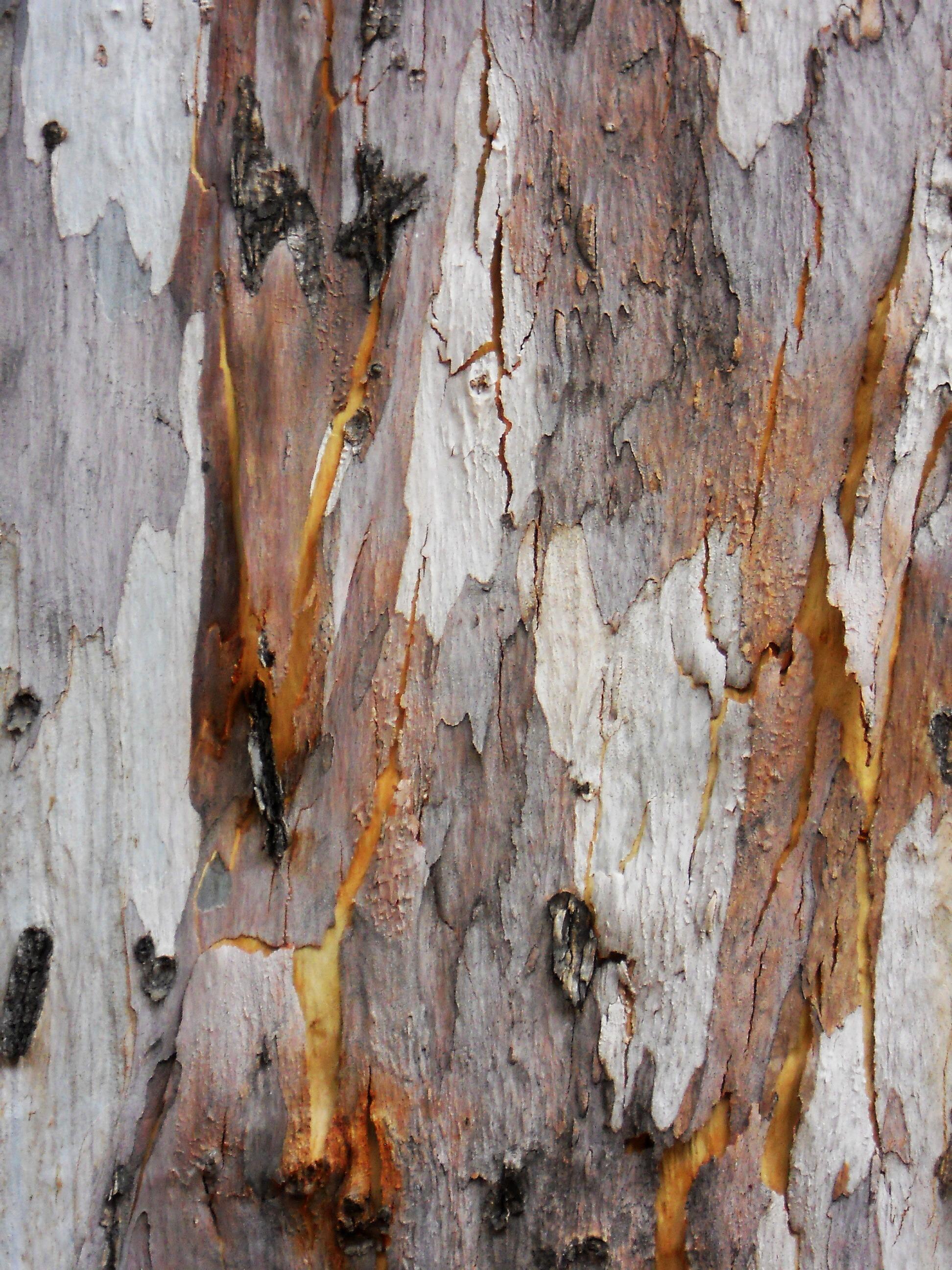 texture woods