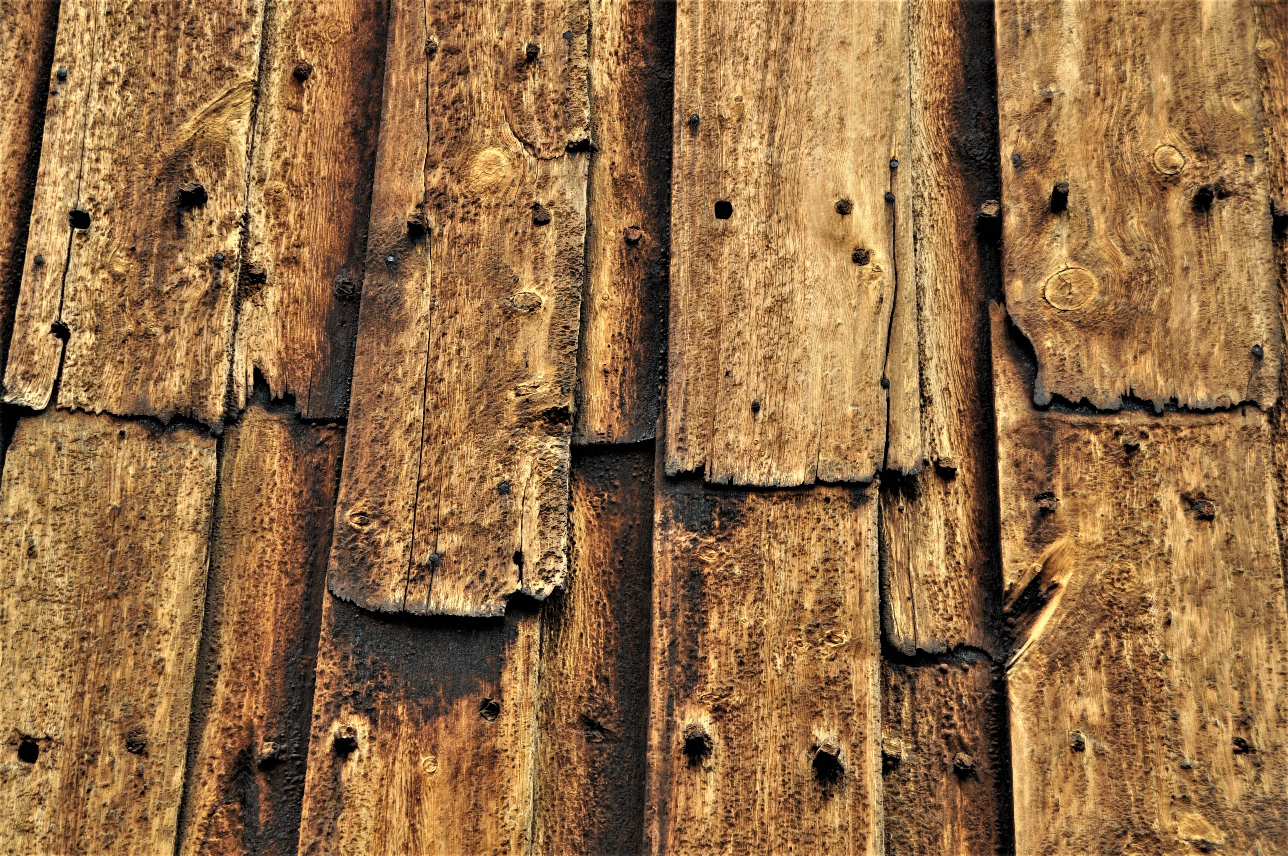 Holz Altern kostenlose foto baum ast textur blatt kofferraum alt boden