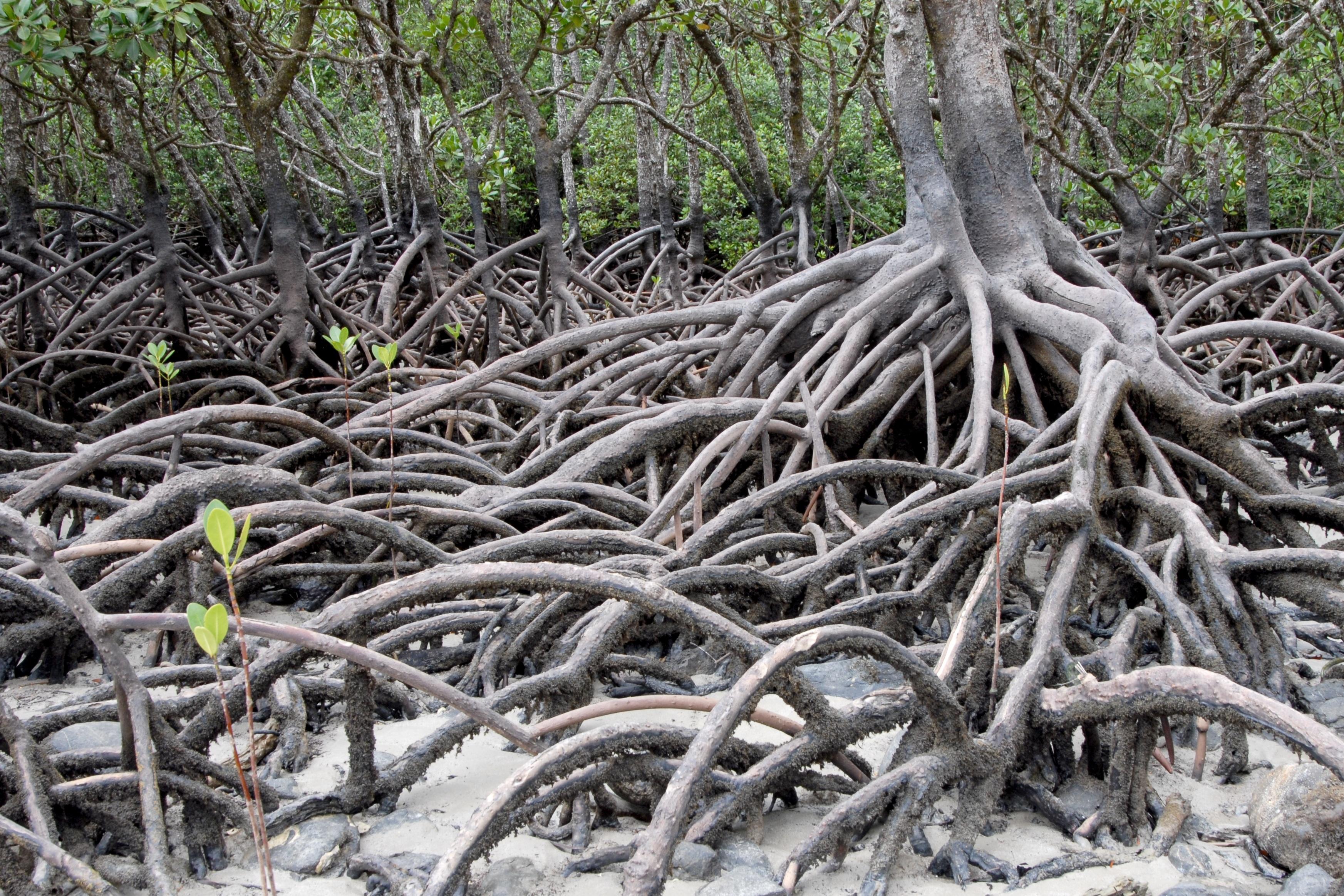 Images gratuites arbre branche plante tronc racine - Arbre a faible racine ...