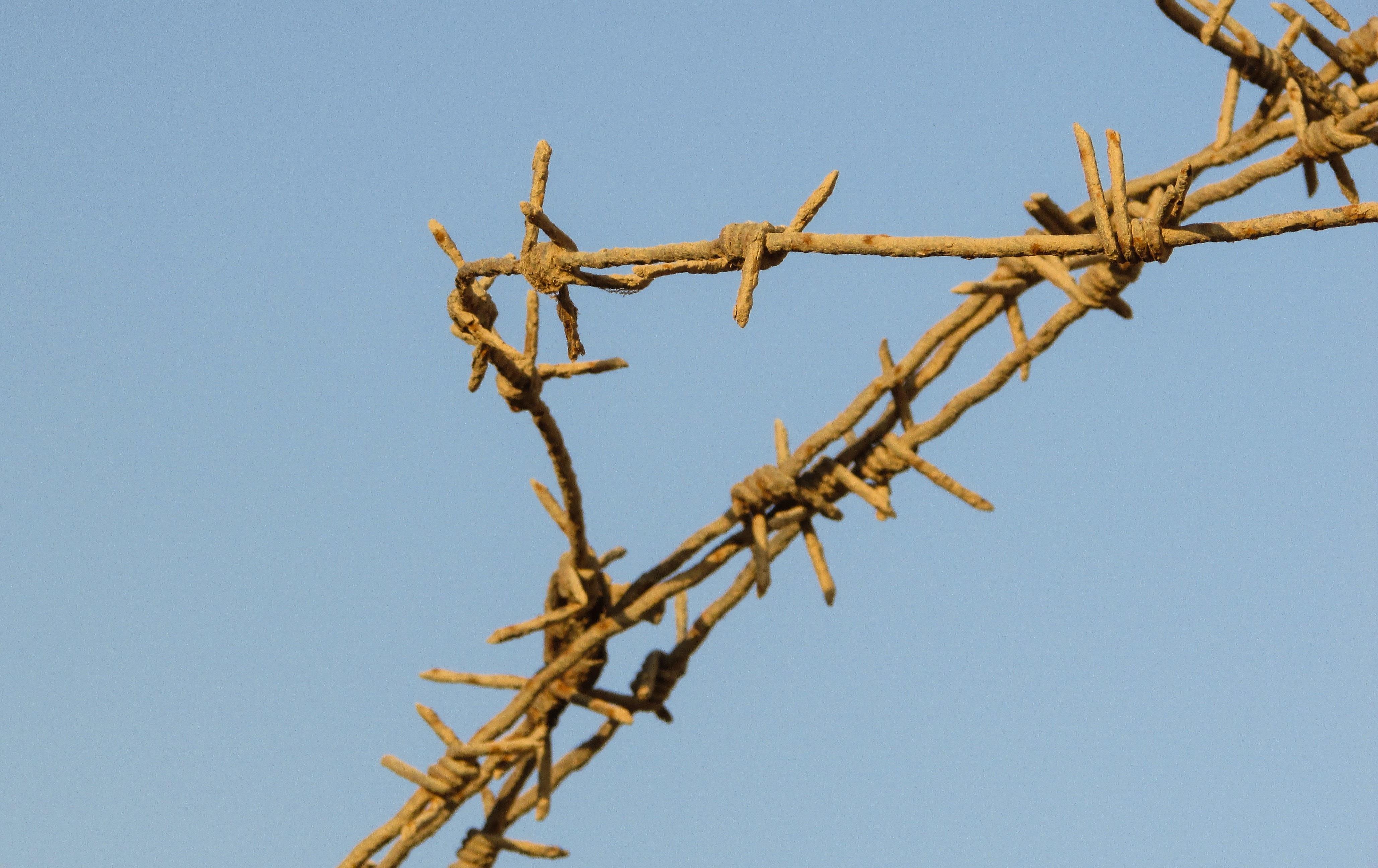 Kostenlose foto : Baum, Ast, scharf, Zaun, Pflanze, Himmel, Blume ...