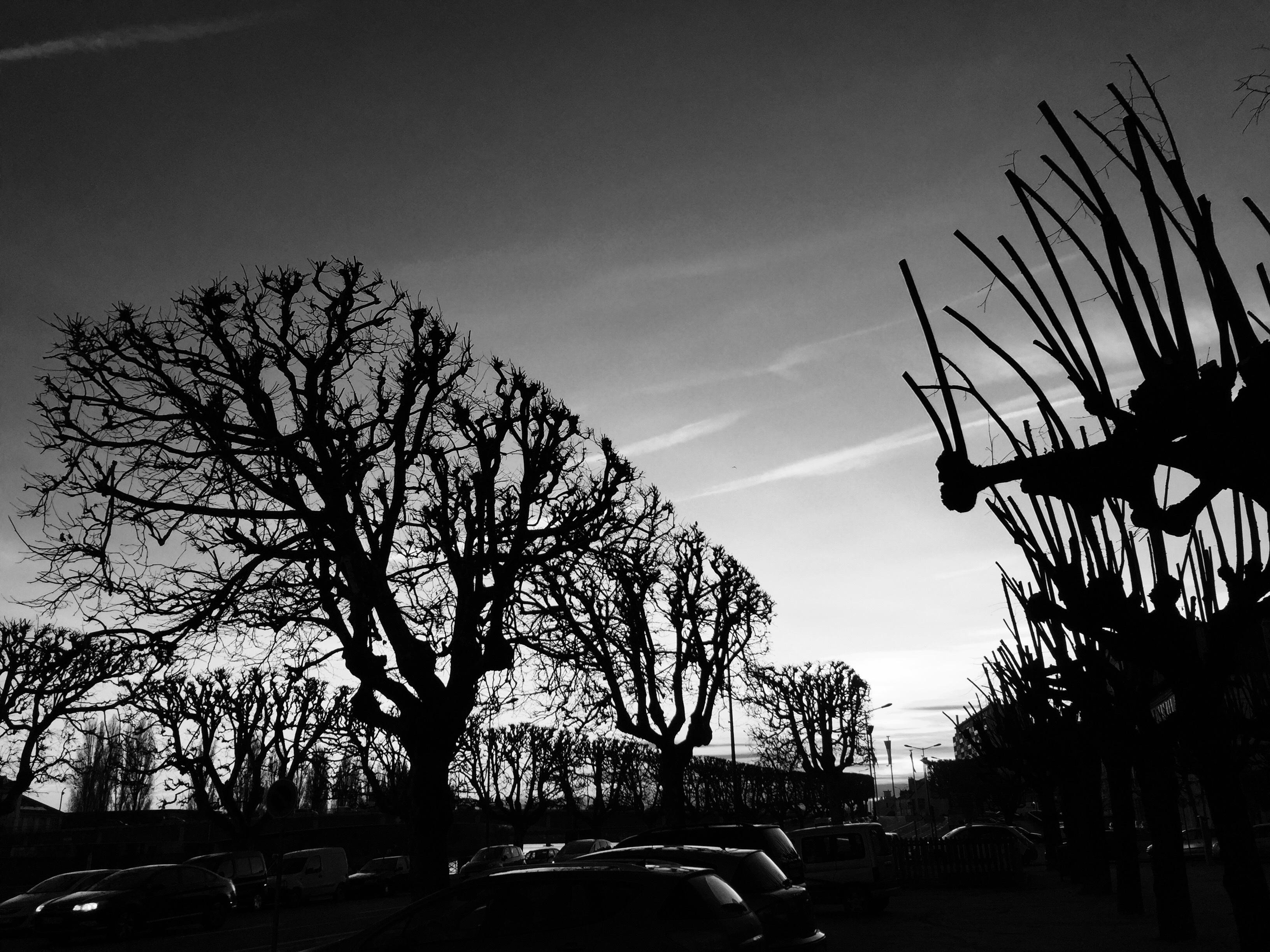 Banco de imagens : ramo, silhueta, nuvem, Preto e branco, plantar, céu, Por  do sol, noite, fotografia, luz solar, manhã, alvorecer, crepúsculo, tarde,  Trevas, árvore morta, monocromático, humor, forma, Luz de fundo,