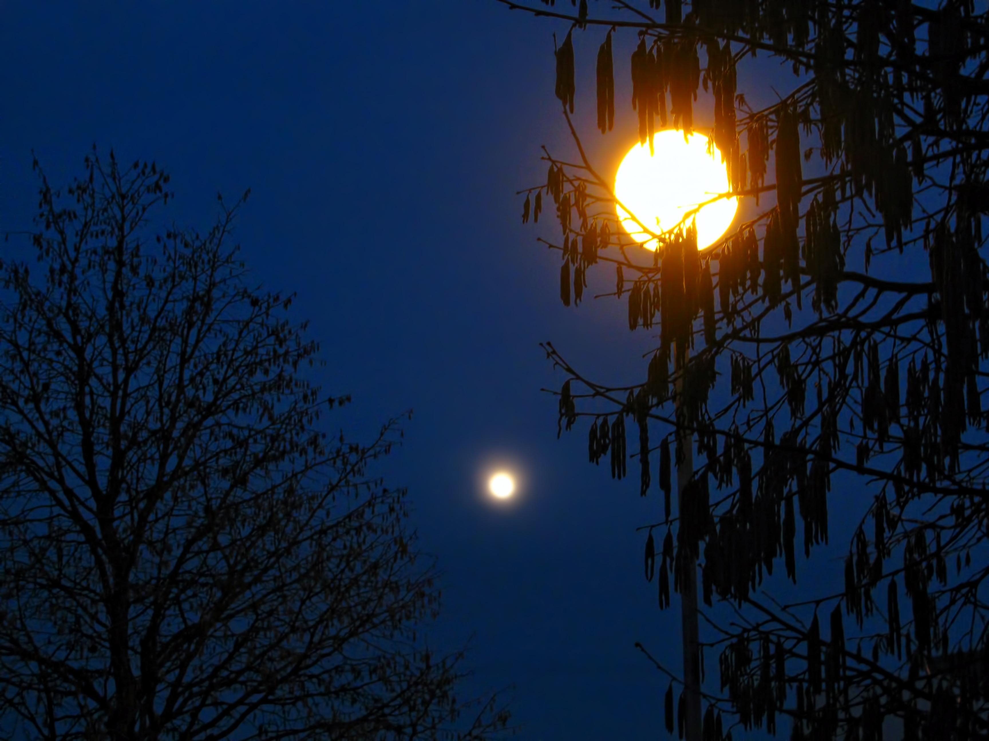 Fotos gratis rbol rama silueta ligero cielo puesta for Moonlight iluminacion