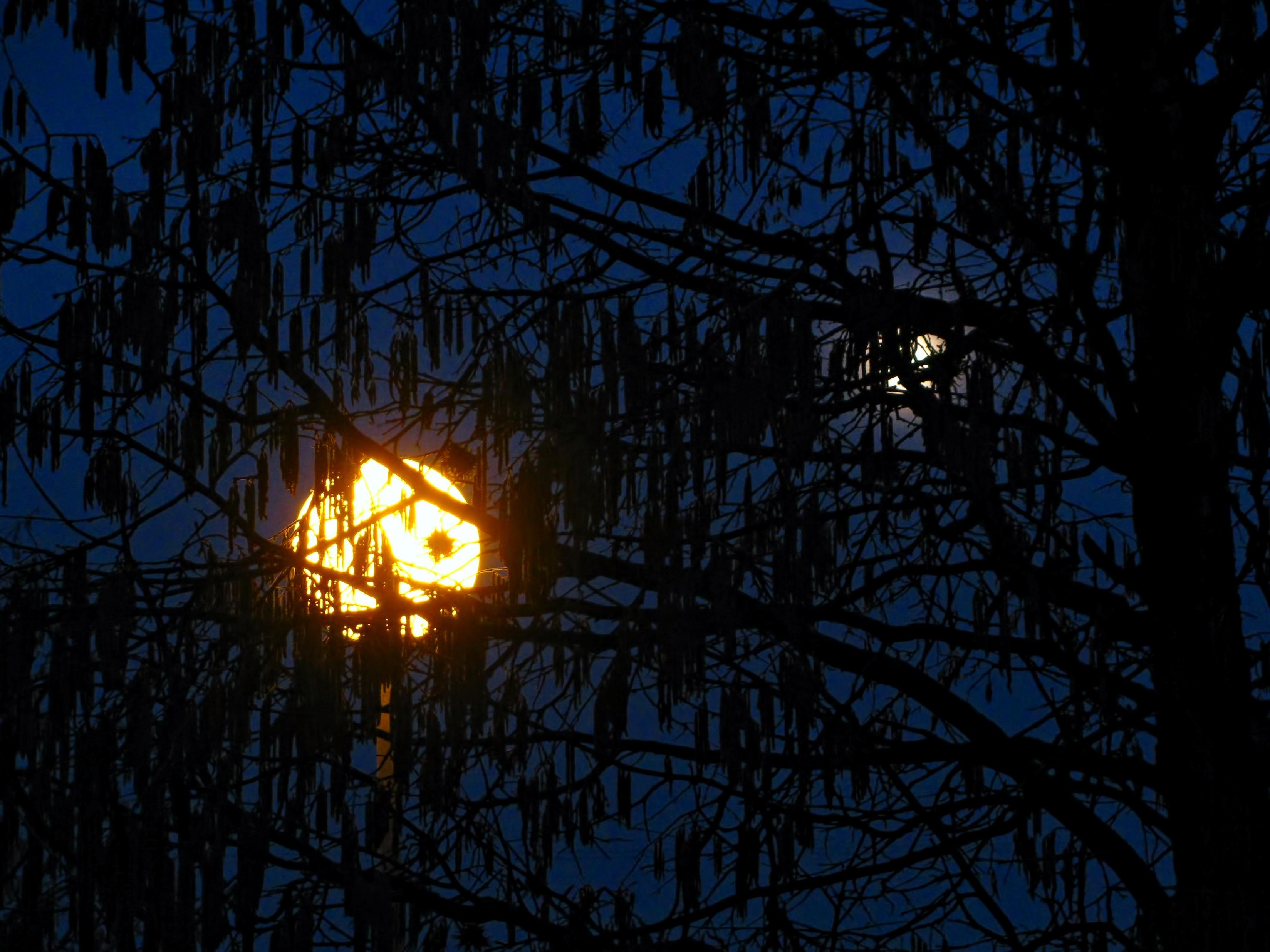Gratis Afbeeldingen : boom, tak, silhouet, hemel, zon, zonsondergang ...