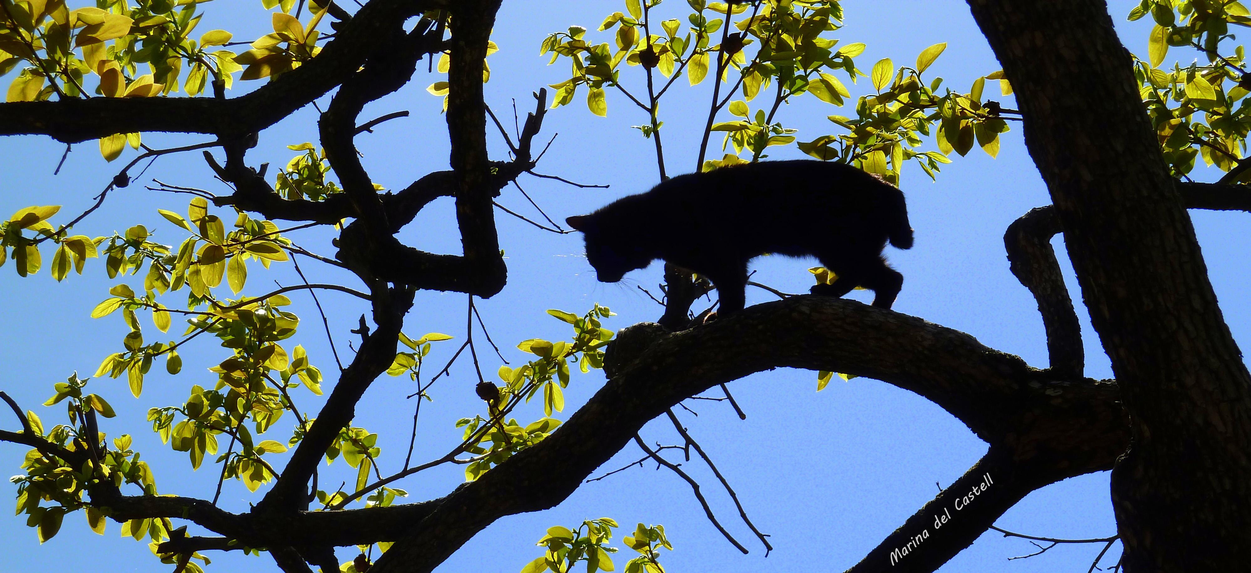 Darmowe Zdjęcia Drzewo Gałąź Sylwetka Fioletowy Azjatyckiego