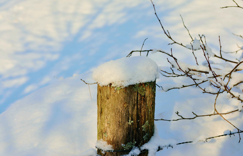 Kostenlose foto Baum Ast Schnee kalt Winter Vogel Zaun