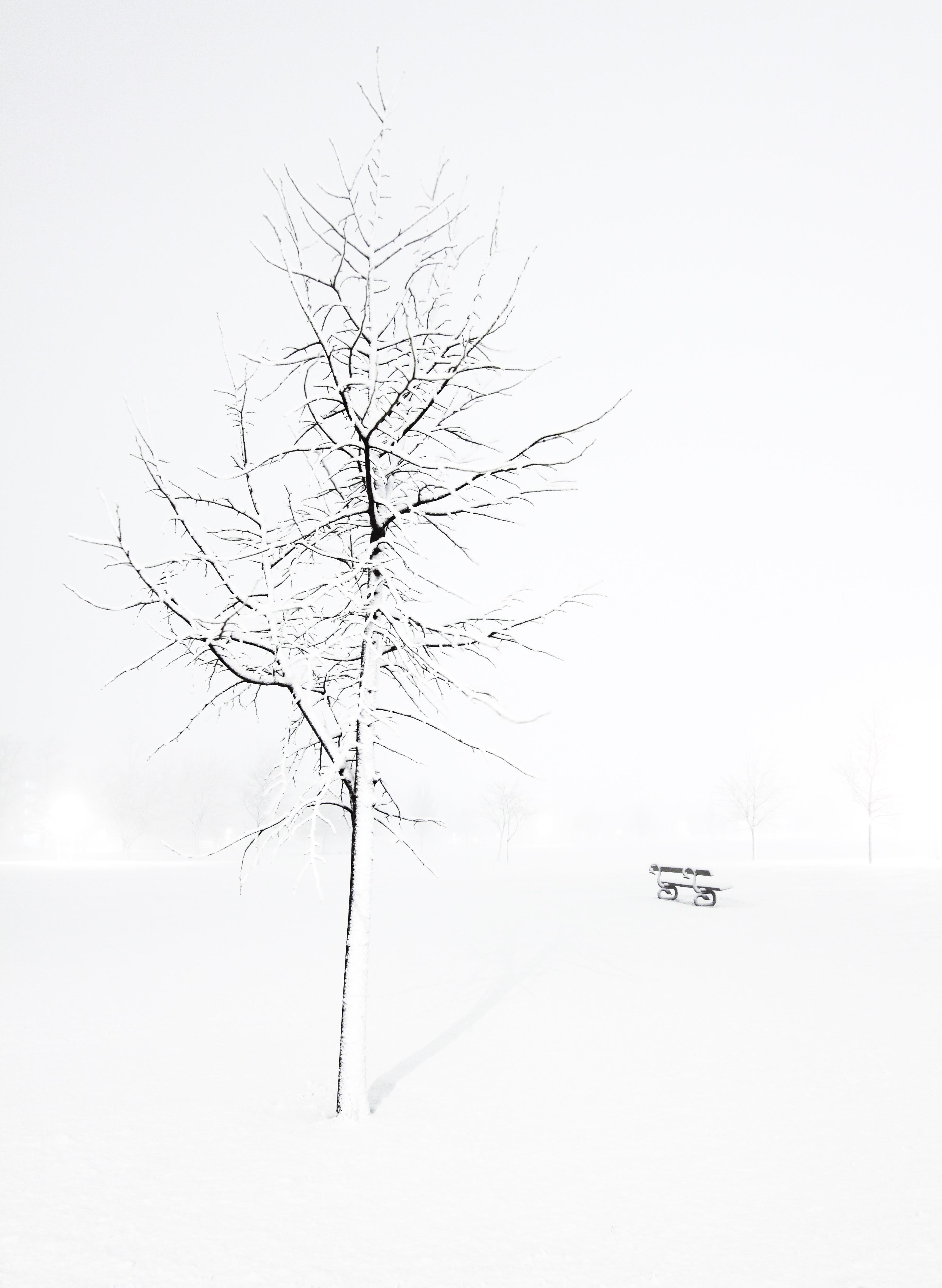 Images Gratuites Arbre Branche Du Froid Hiver Noir Et Blanc