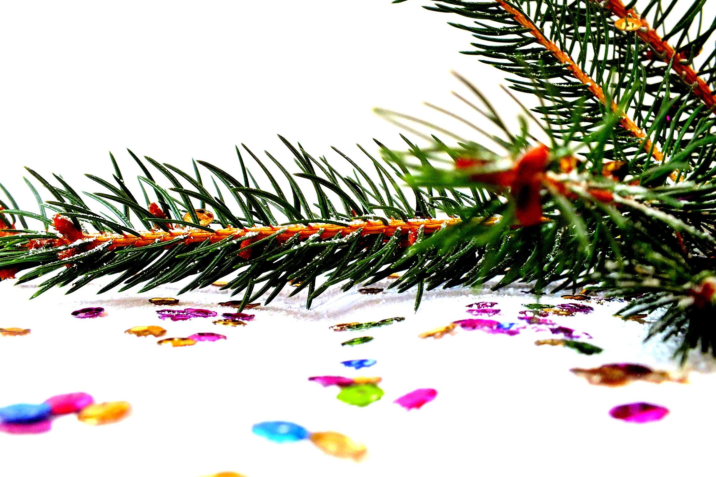 images gratuites branche aiguille sapin arbre de no l flocon de neige conif re. Black Bedroom Furniture Sets. Home Design Ideas