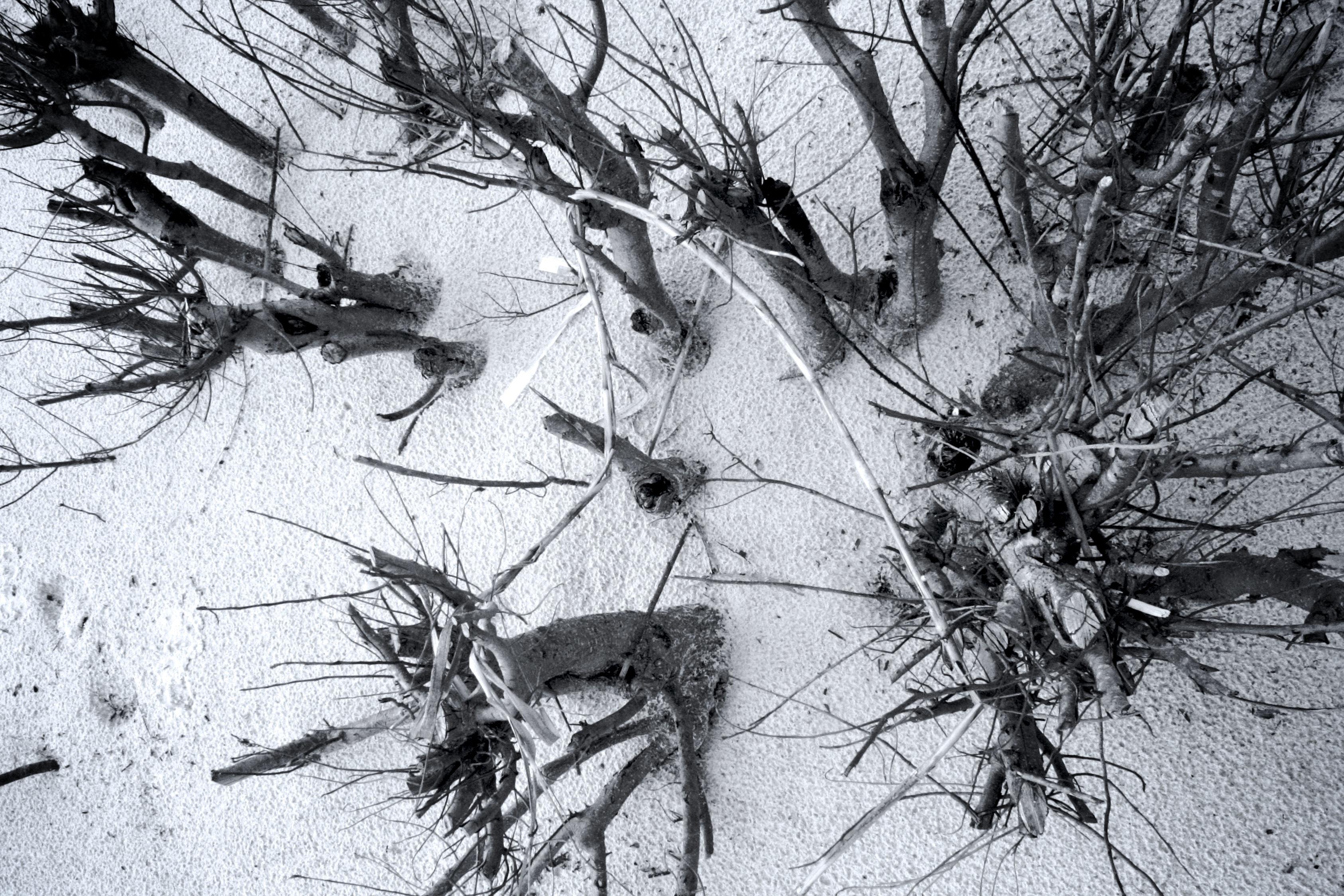 Images Gratuites Arbre Branche Neige Hiver Noir Et Blanc