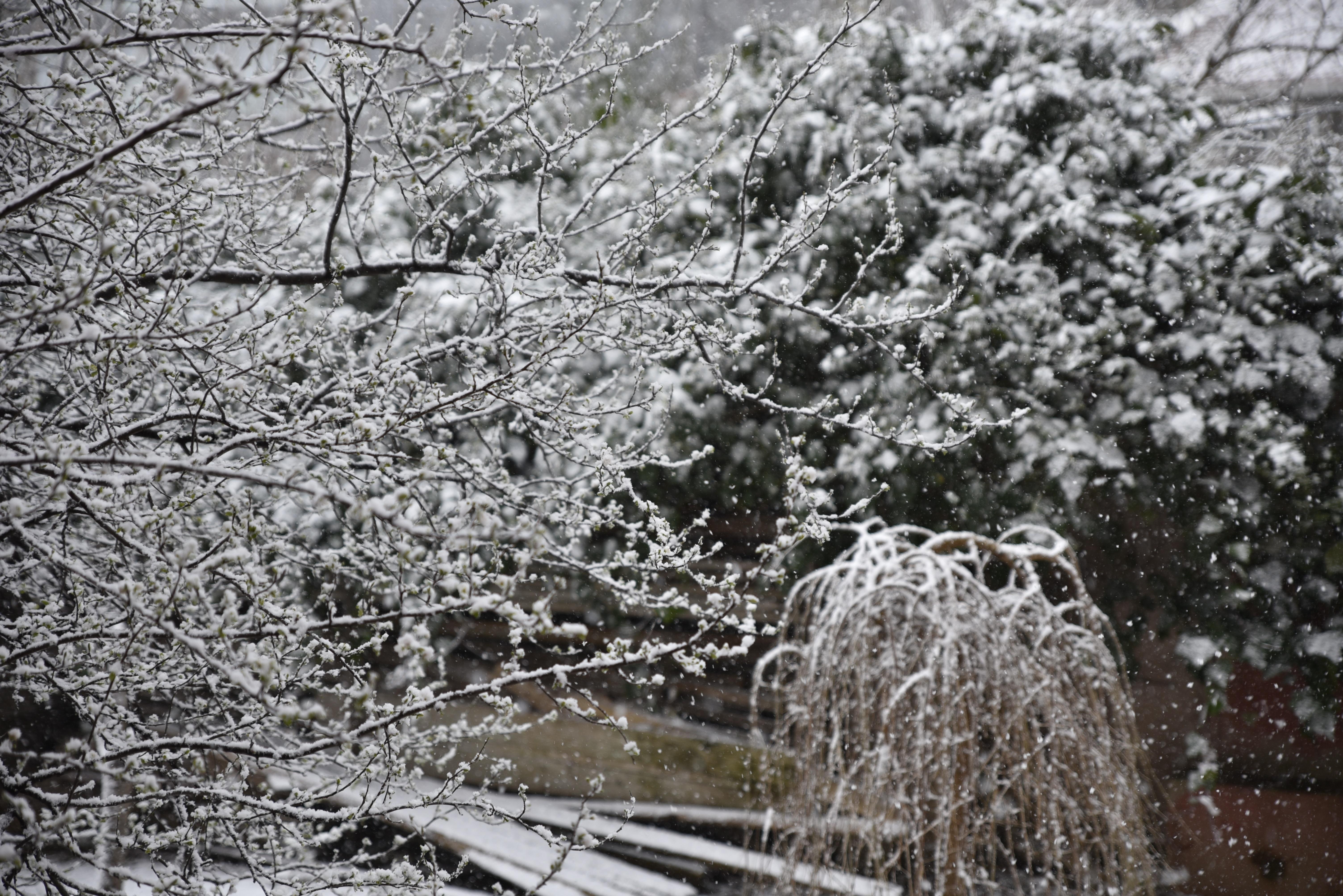 забывайте подниматься картинки зима дождь без цветаева дочерей, могла
