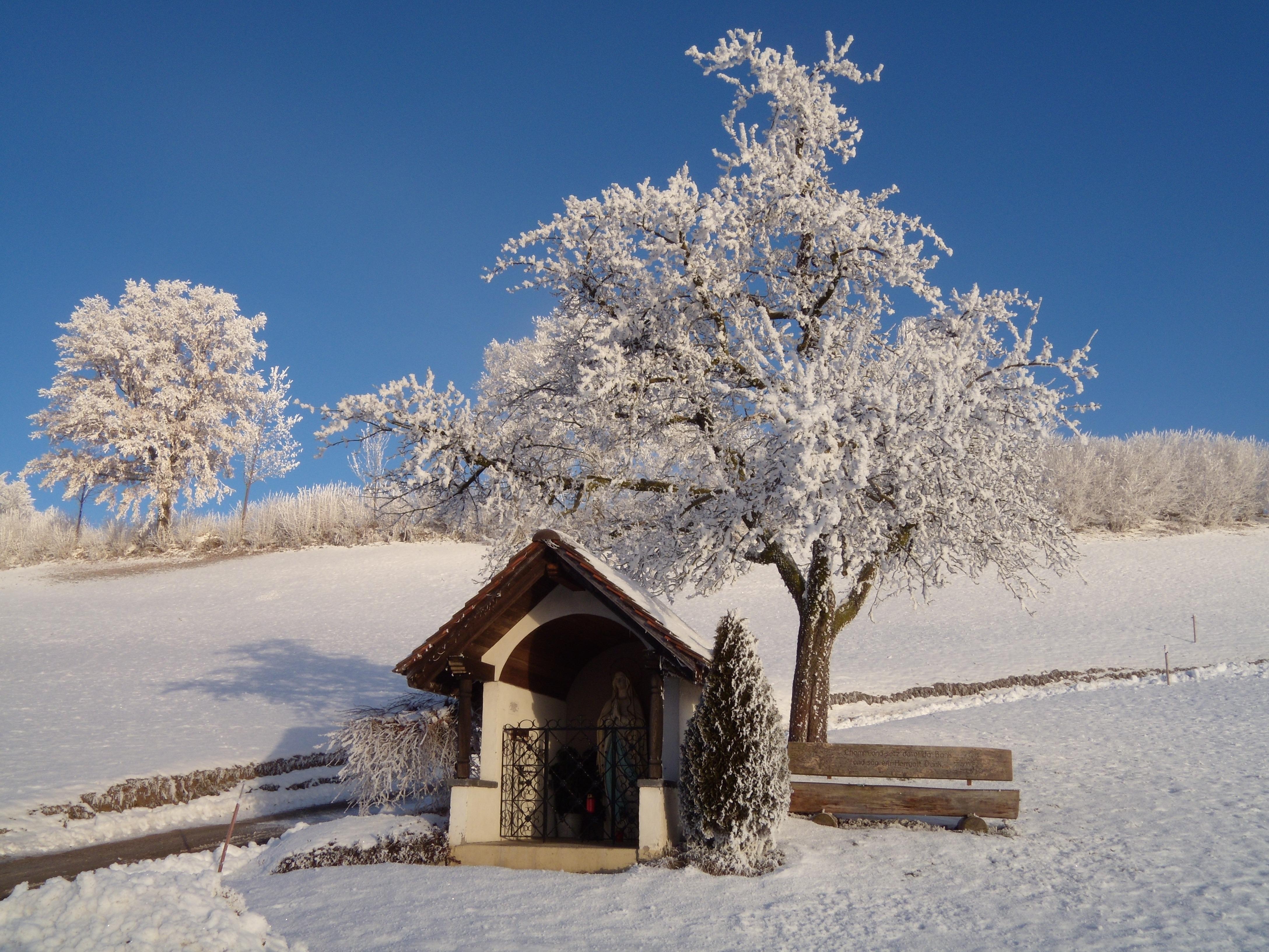 сочетает картинка деревья и кусты зимой законным мандатарием над