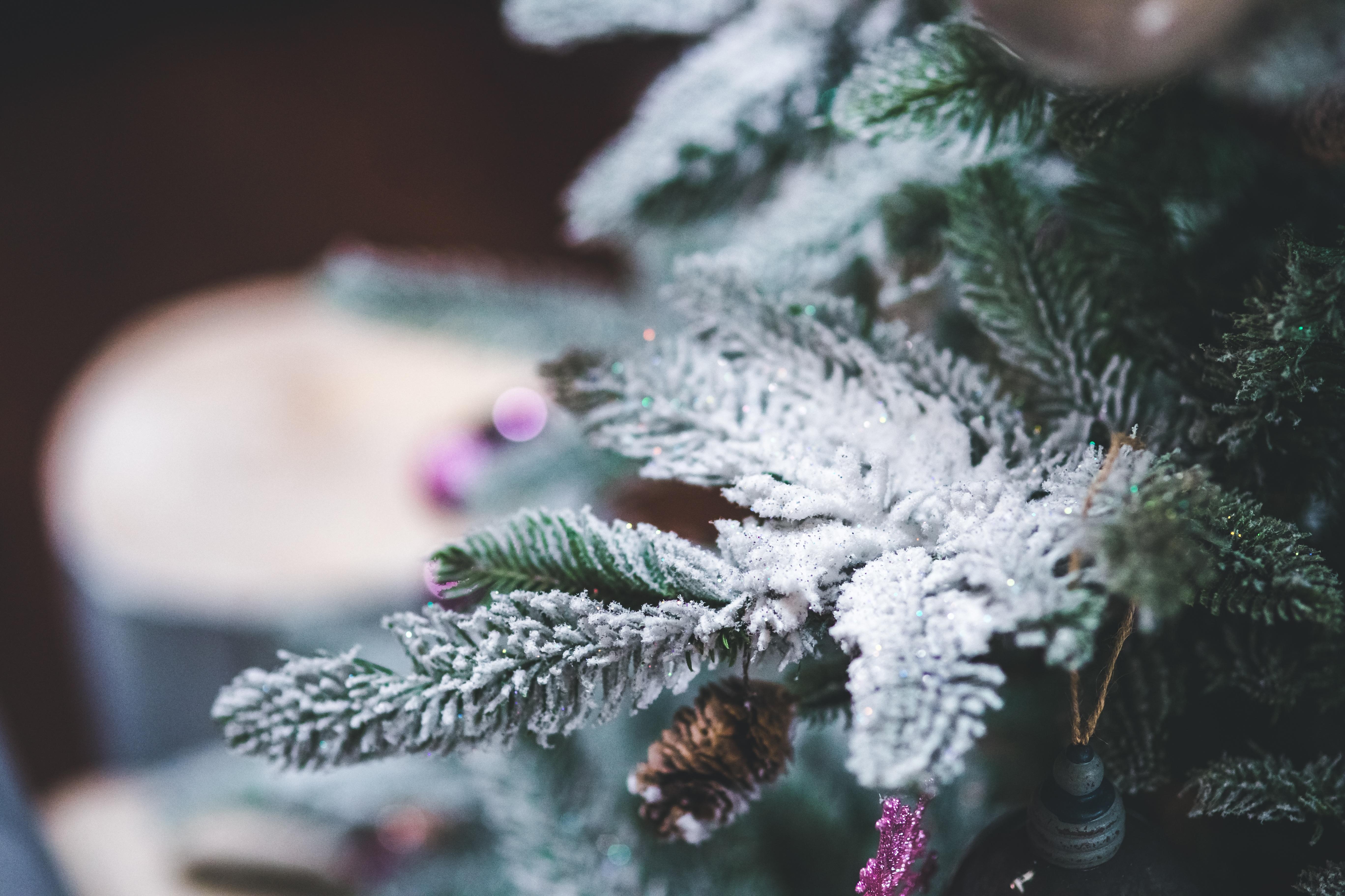 Wallpaper Of Christmas Tree
