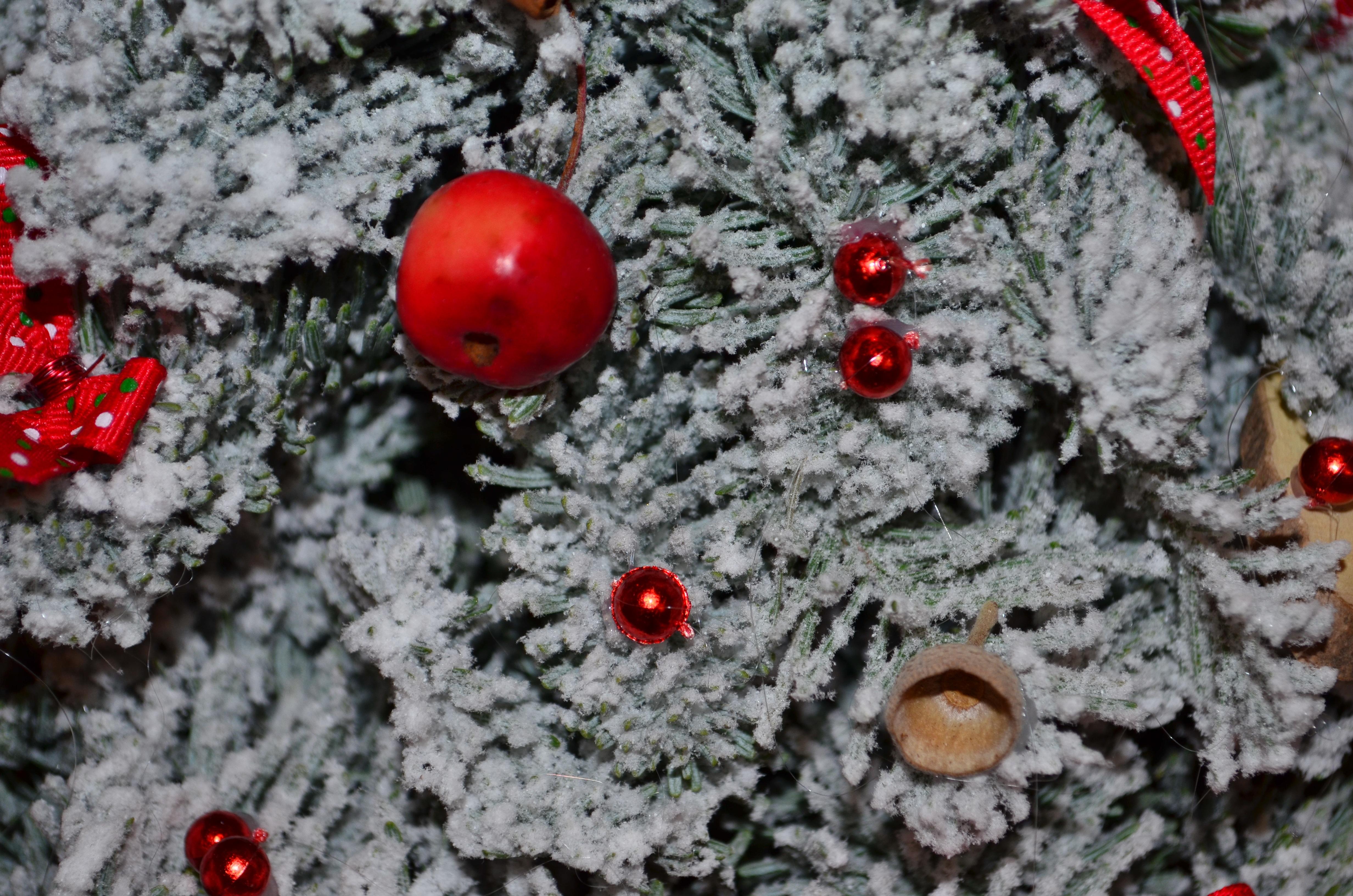 Images gratuites arbre branche neige hiver plante for Plante noel rouge