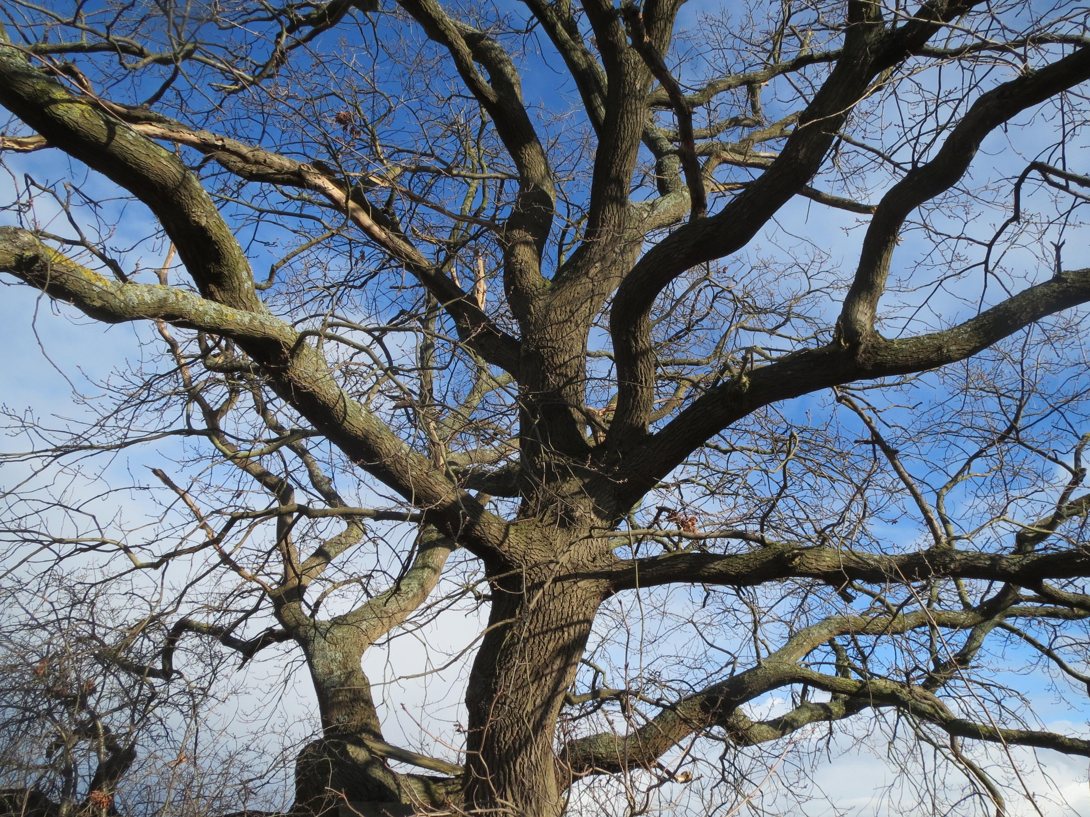 images gratuites arbre branche neige hiver feuille fleur tronc printemps l 39 automne. Black Bedroom Furniture Sets. Home Design Ideas