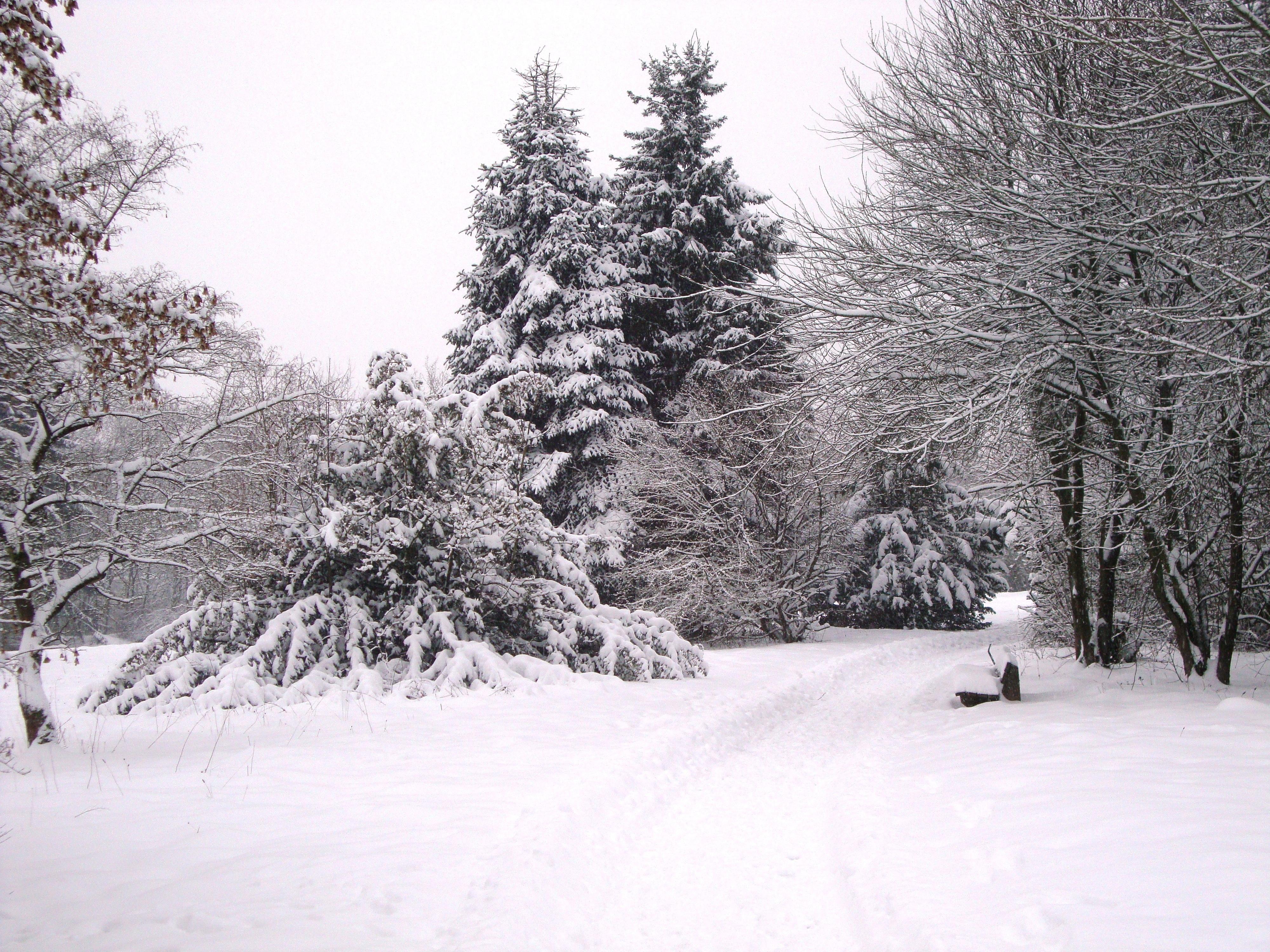 картинки снежная погода свежему воздуху