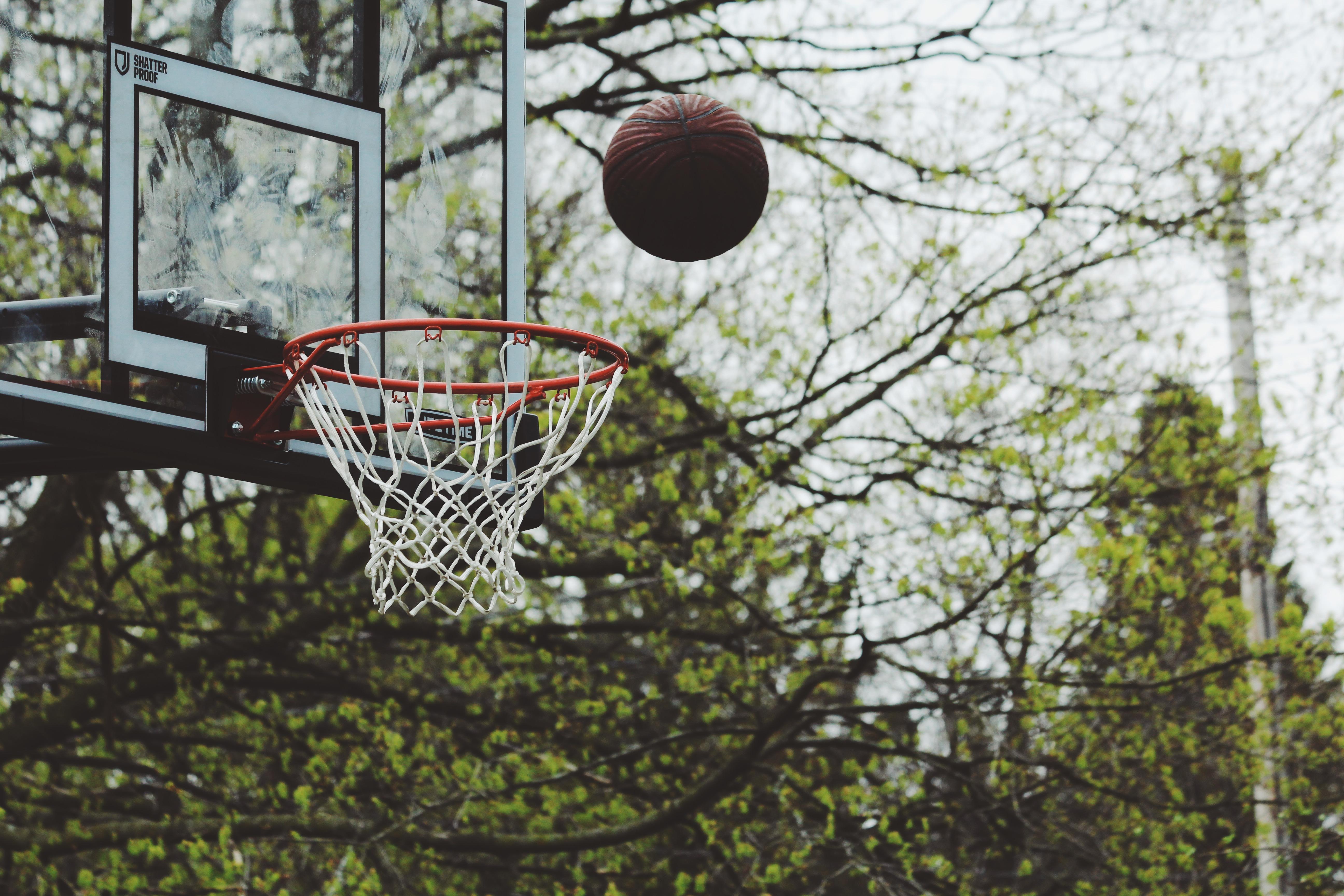 free images tree branch sport flower basketball lighting