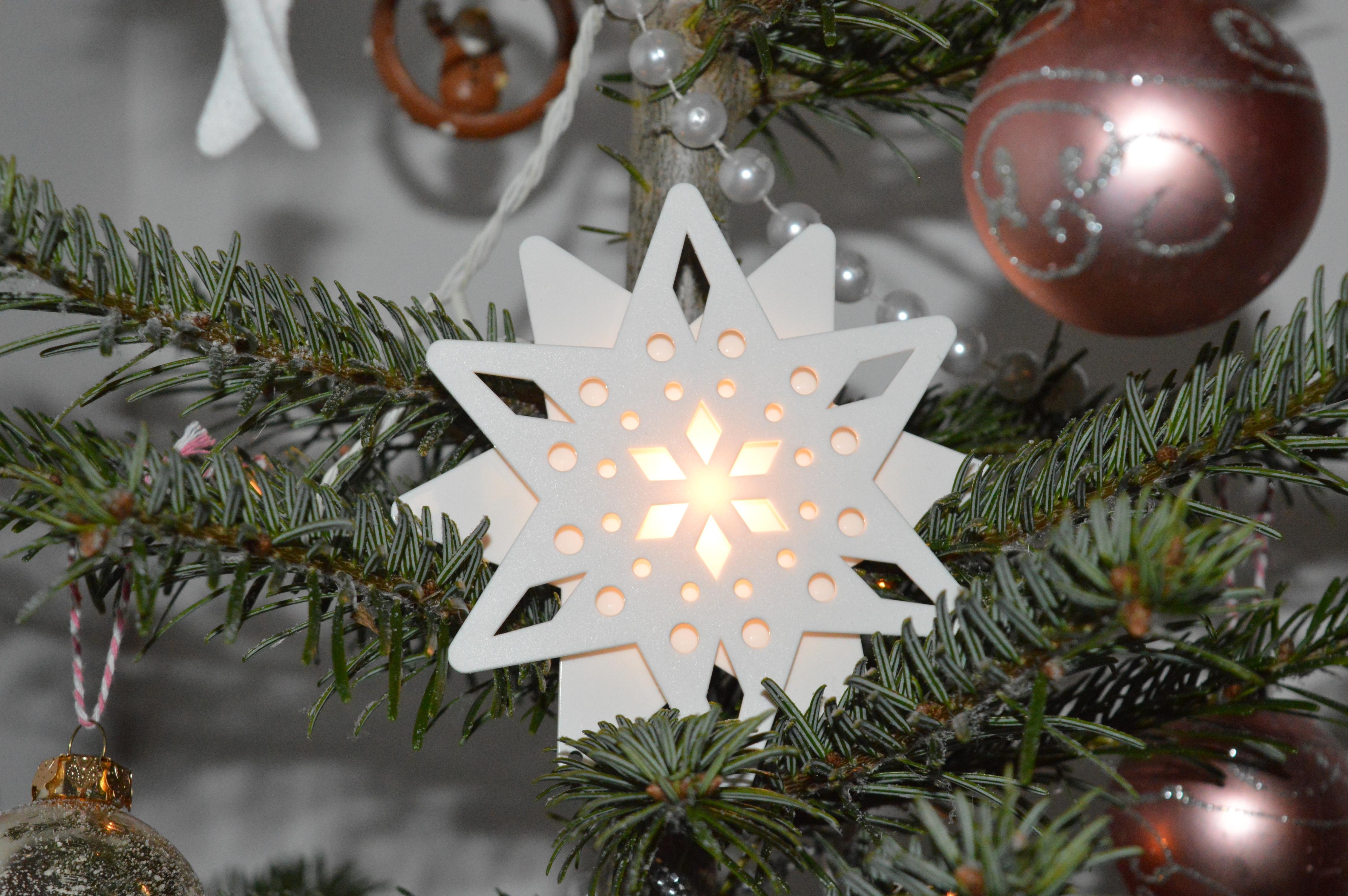 Weihnachtsbaum Girlande.Kostenlose Foto Baum Ast Star Urlaub Weihnachten Tanne