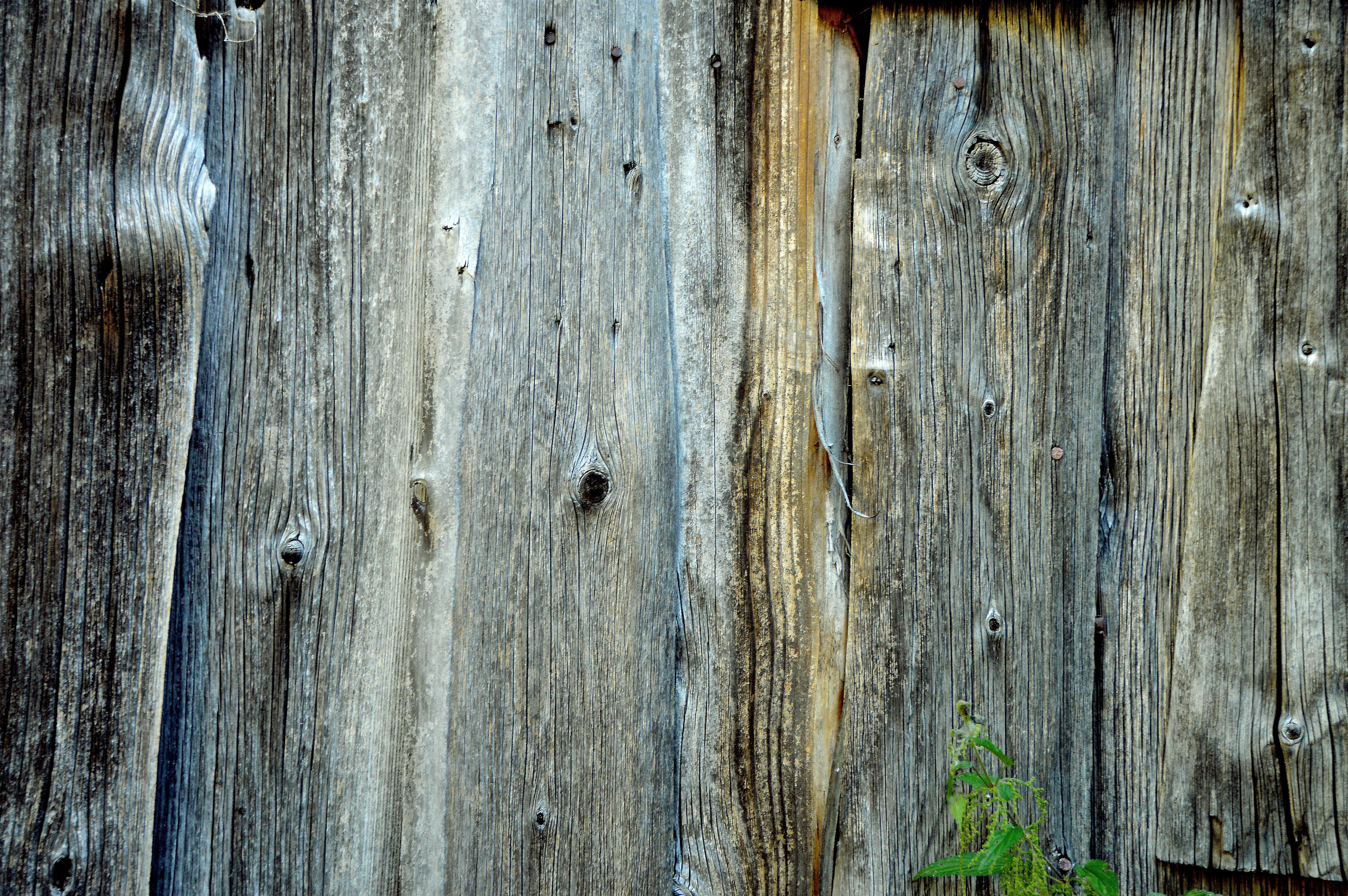 Kostenlose foto : Baum, Ast, Struktur, Tafel, Holz, Korn, Textur ...