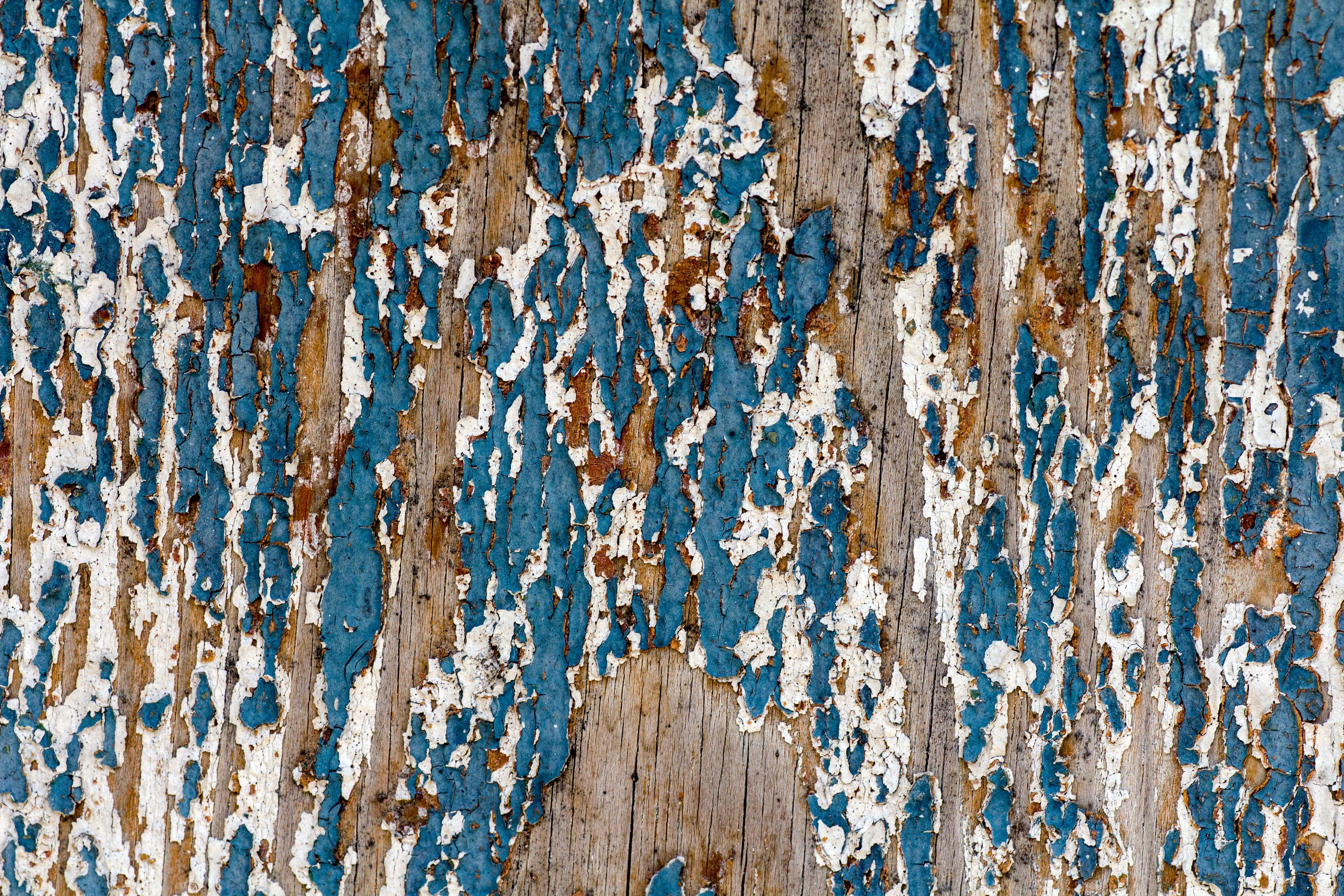 images gratuites   arbre  branche  structure  bois
