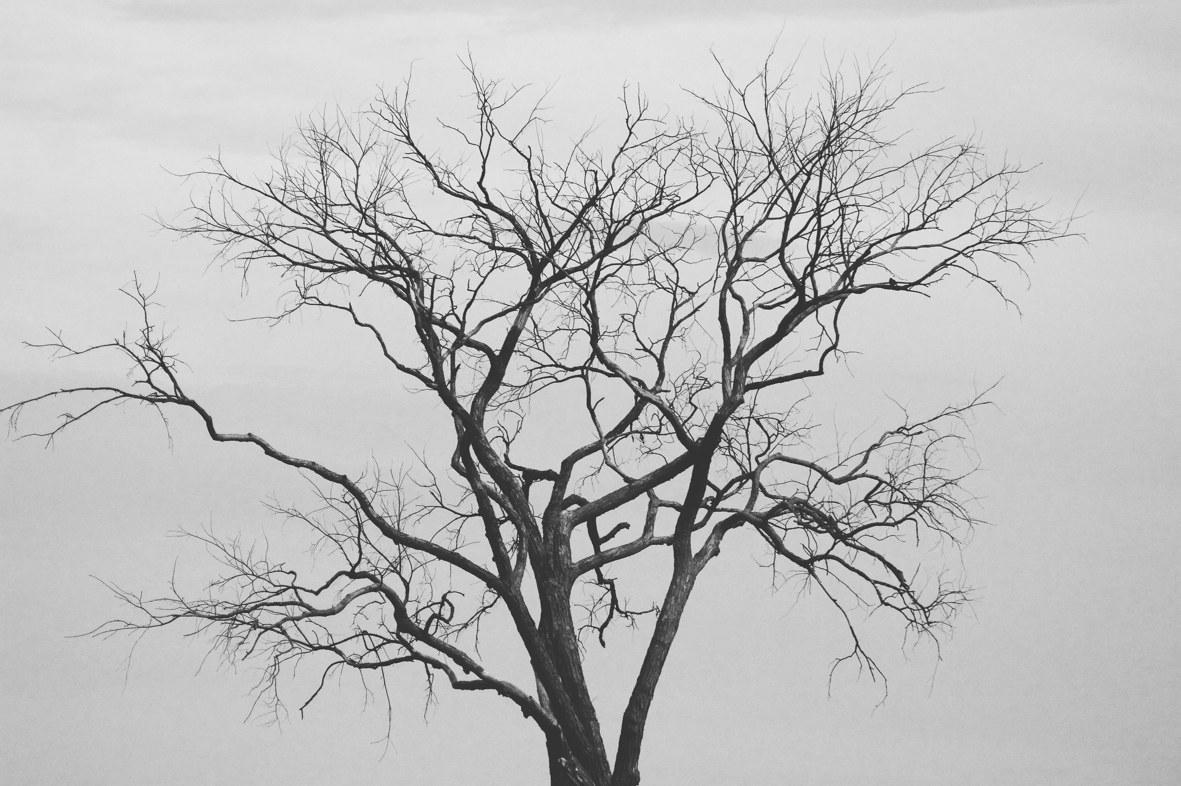 images gratuites arbre branche hiver noir et blanc plante brouillard monochrome. Black Bedroom Furniture Sets. Home Design Ideas