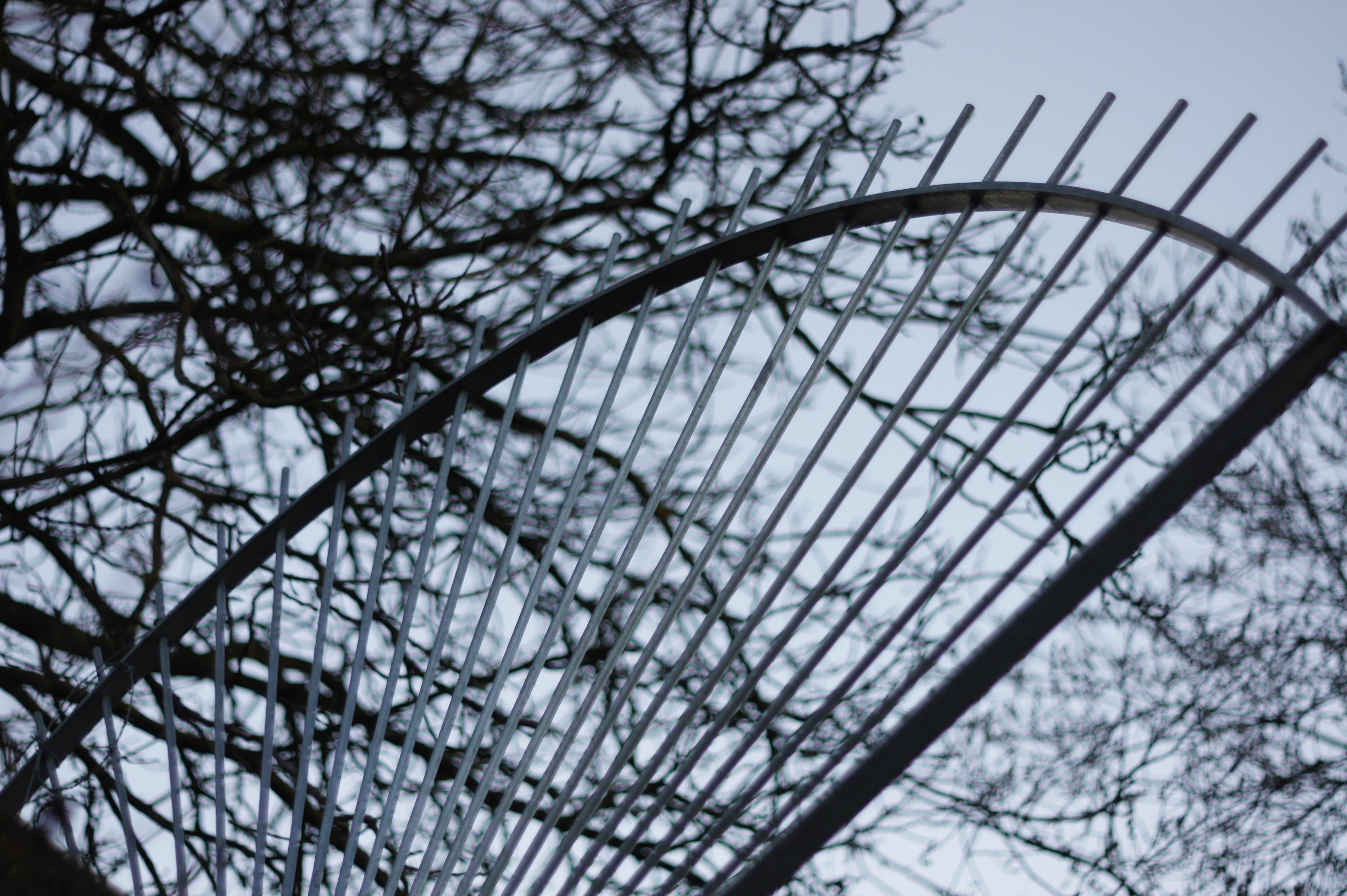Kostenlose foto Baum Ast Winter Zaun Pflanze Blume Frost