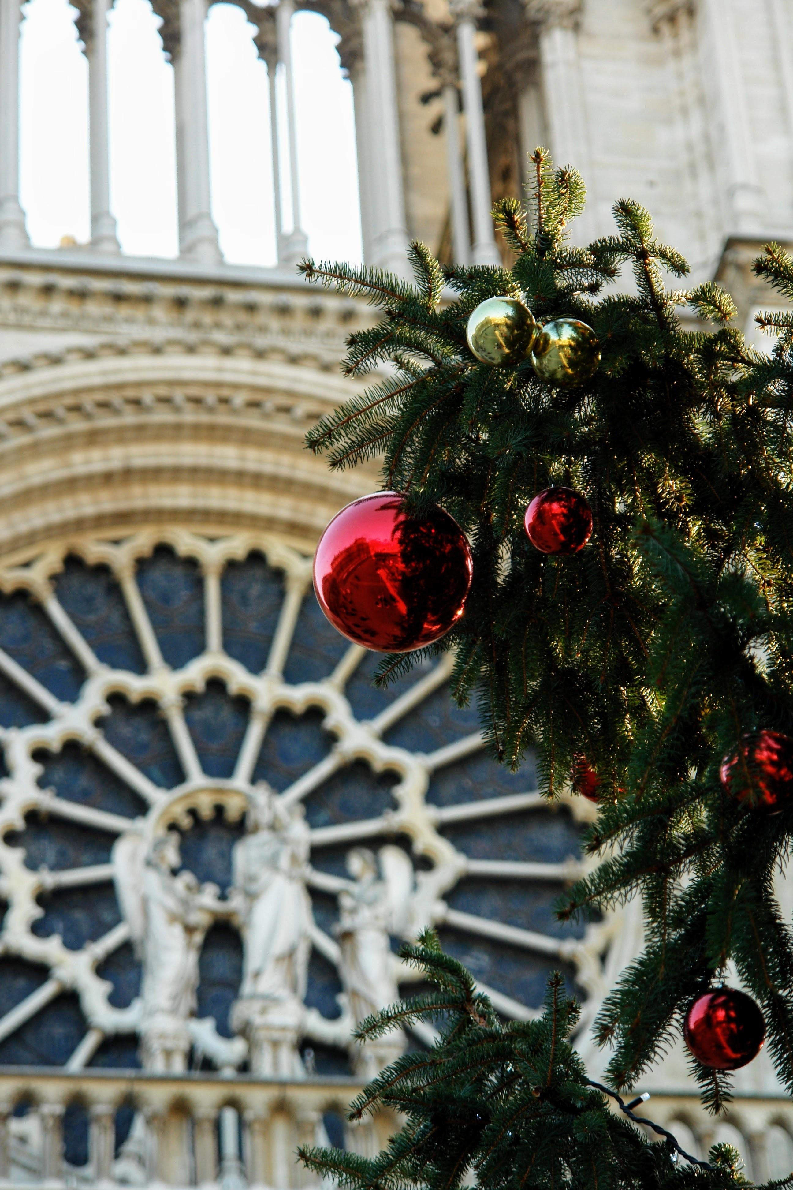 Kostenlose foto : Baum, Ast, Winter, Blume, Paris, Frankreich ...