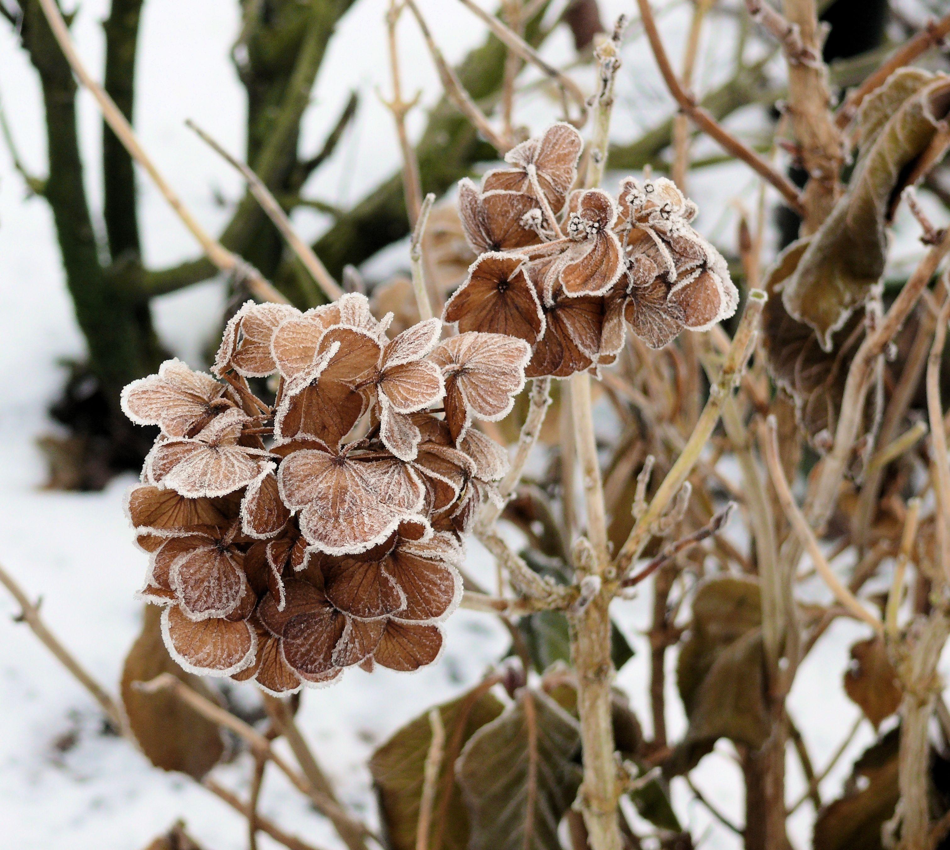 Images gratuites arbre branche hiver plante feuille for Plante ligneuse