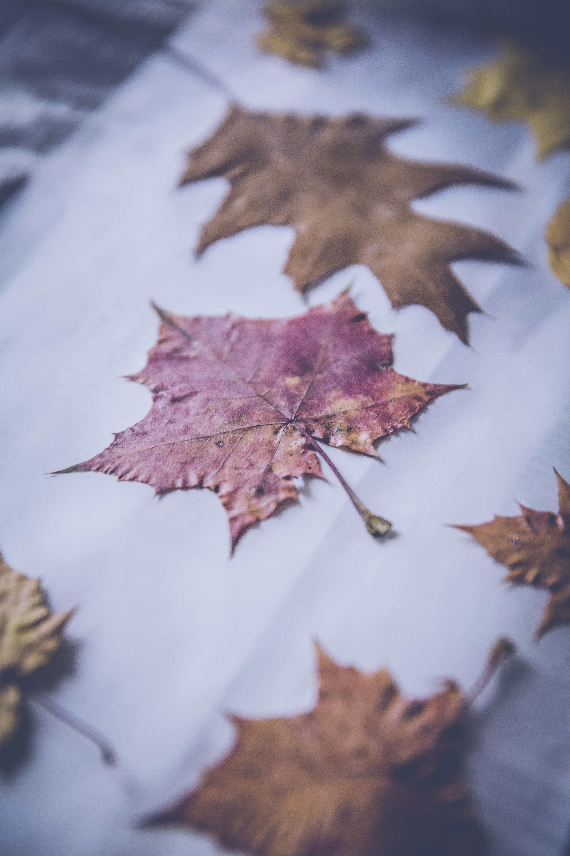 Fotos gratis : rama, invierno, planta, flor, pétalo, escarcha ...
