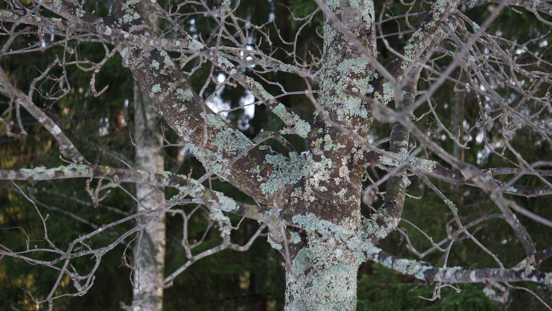 Fotos gratis : árbol, rama, invierno, hoja, escarcha, hielo ...