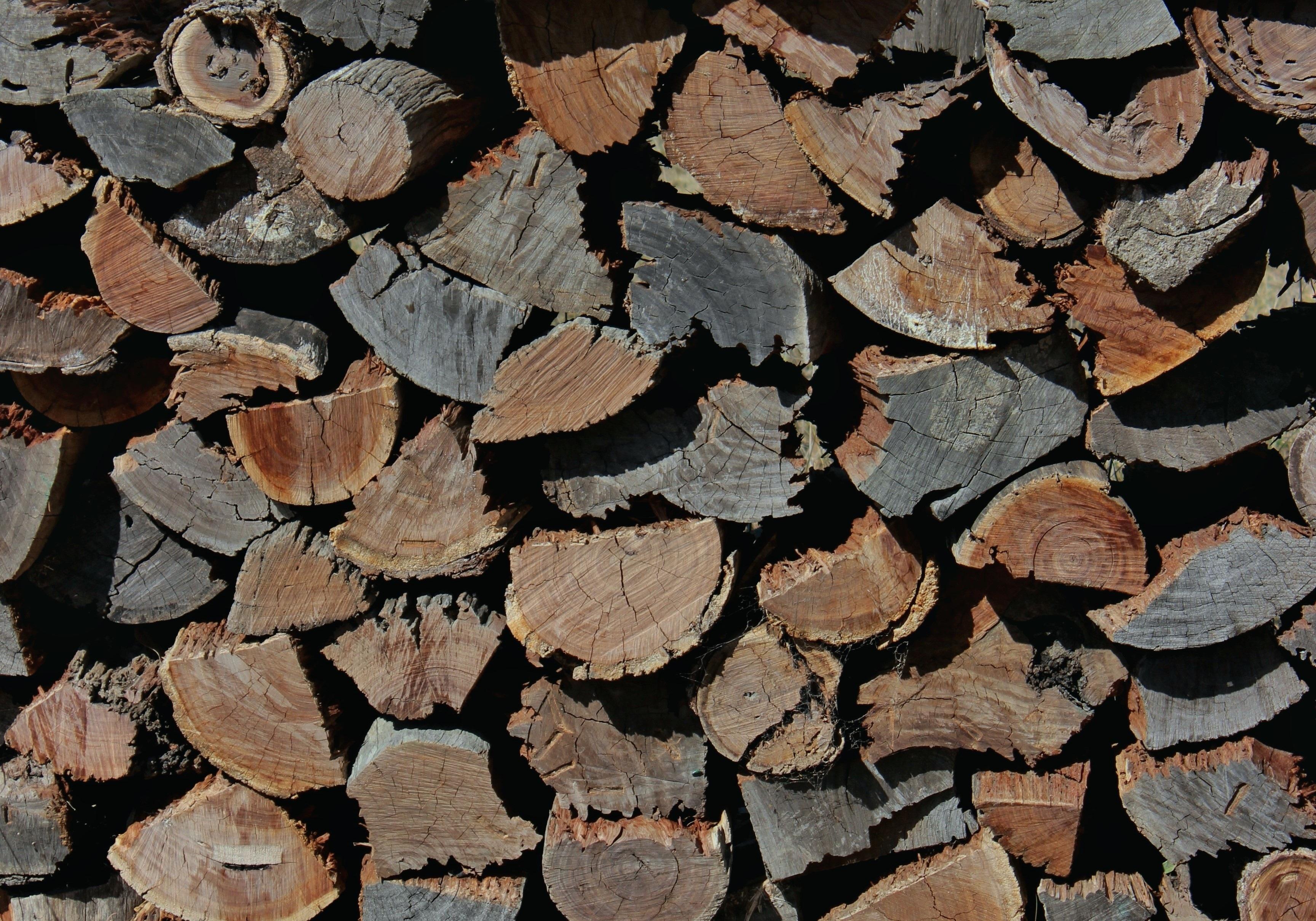 Images gratuites arbre branche texture feuille tronc mur hach pile b che mod le l - Arbre fruitier comme bois de chauffage ...