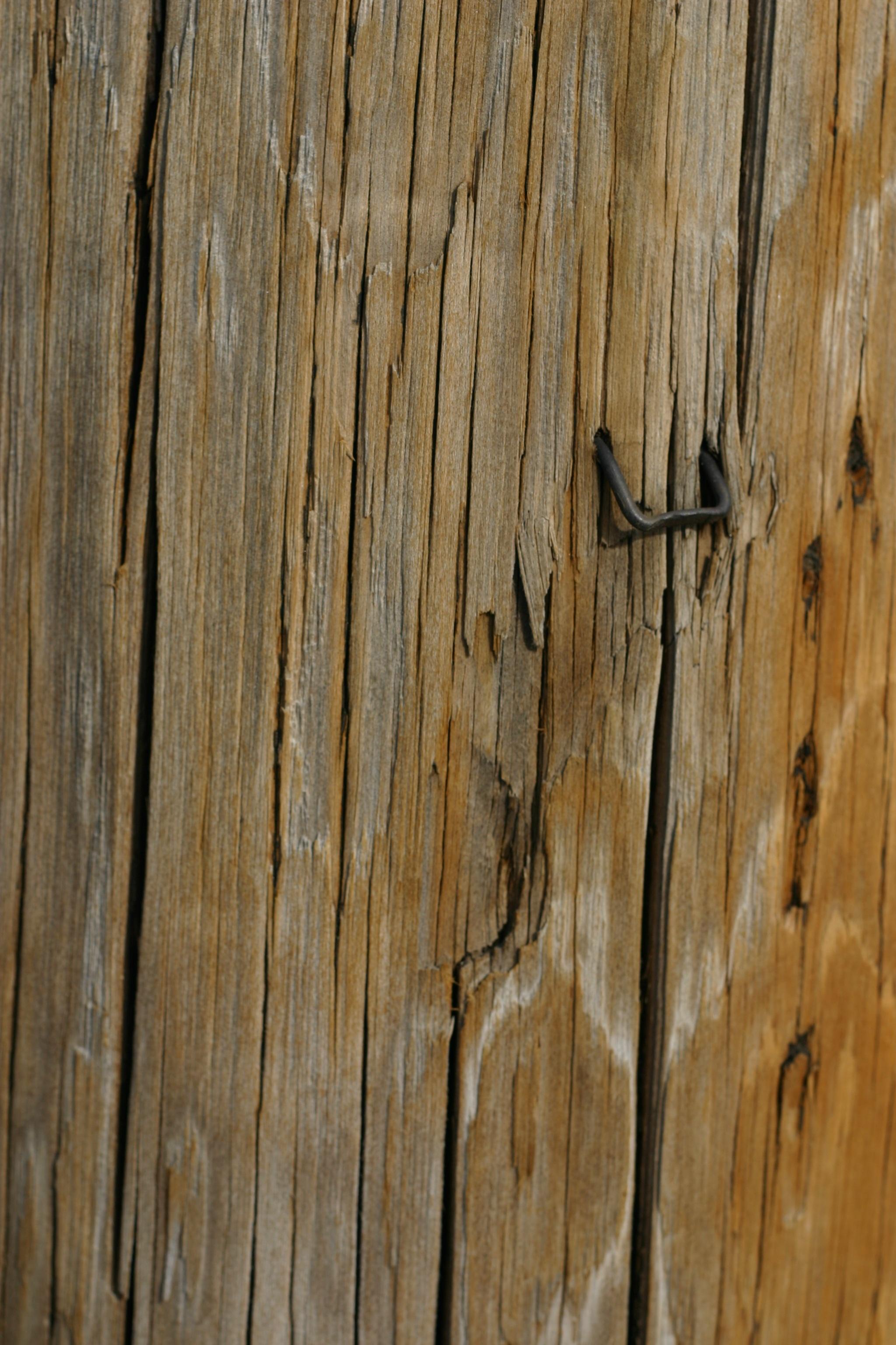 무료 이미지 : 분기, 조직, 널빤지, 트렁크, 벽, 흙, 재목, 전주 ...