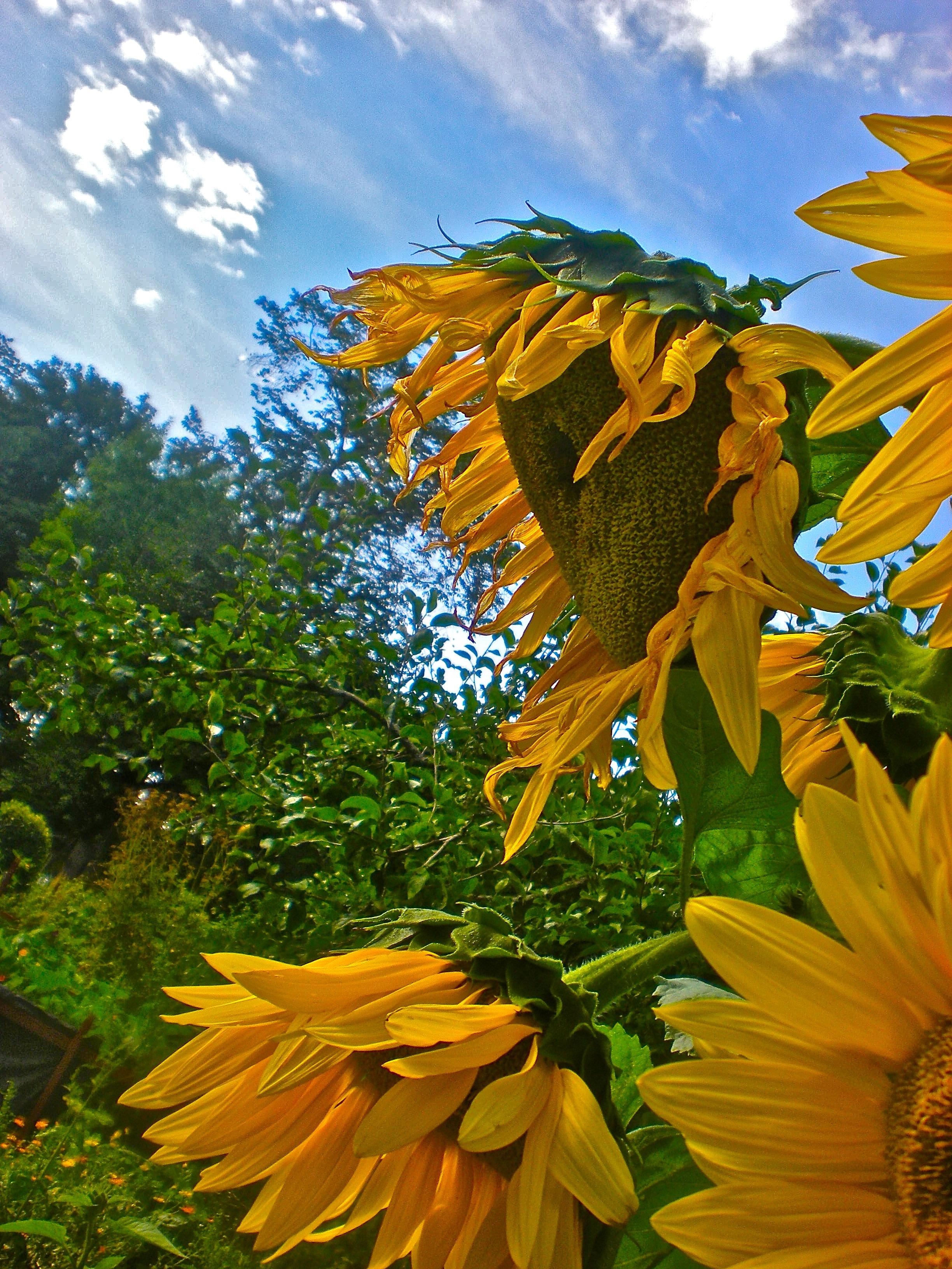 Fotos gratis rbol nube campo prado luz de sol hoja for Arboles para plantar en verano