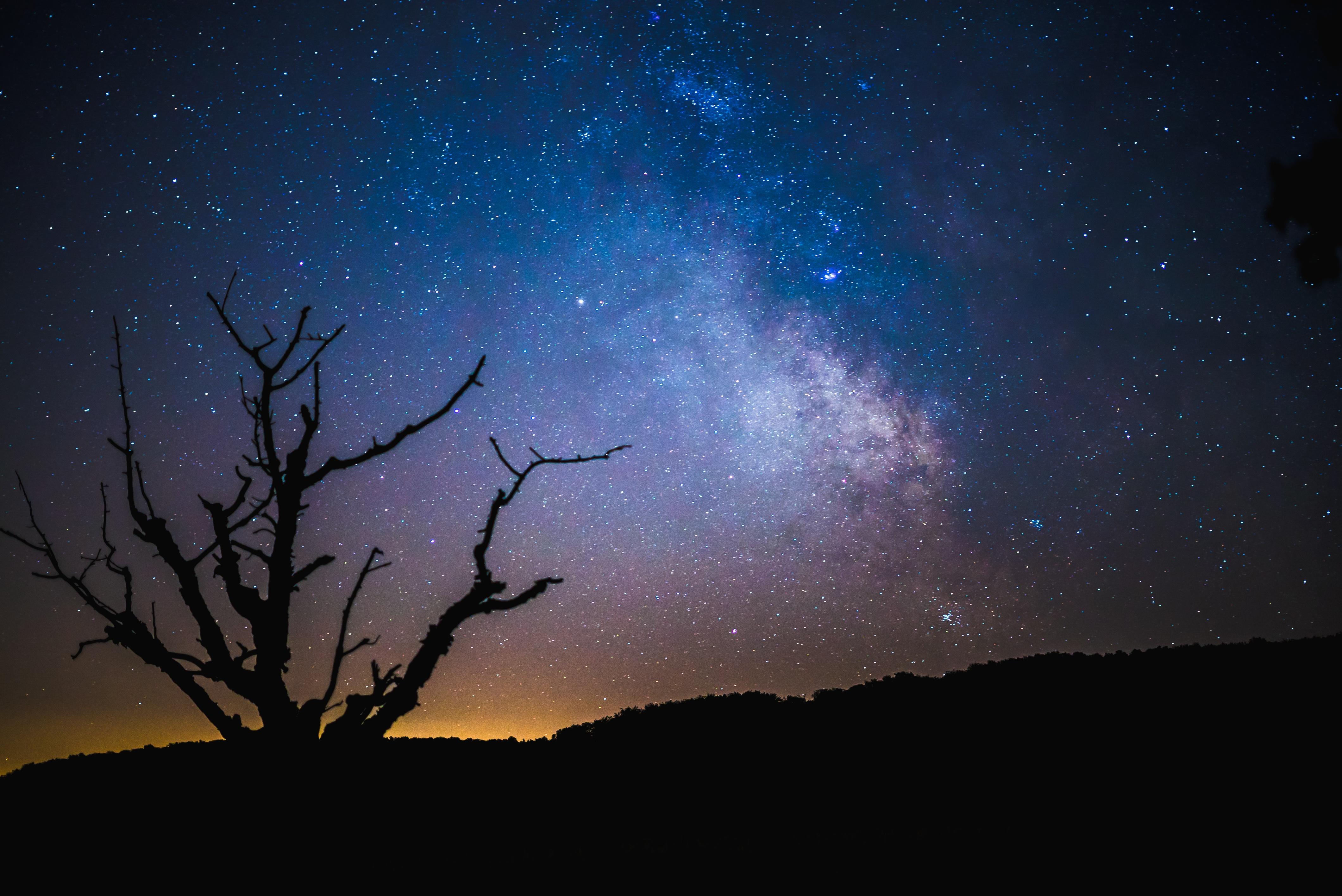 картинки ночное небо и деревья последние три