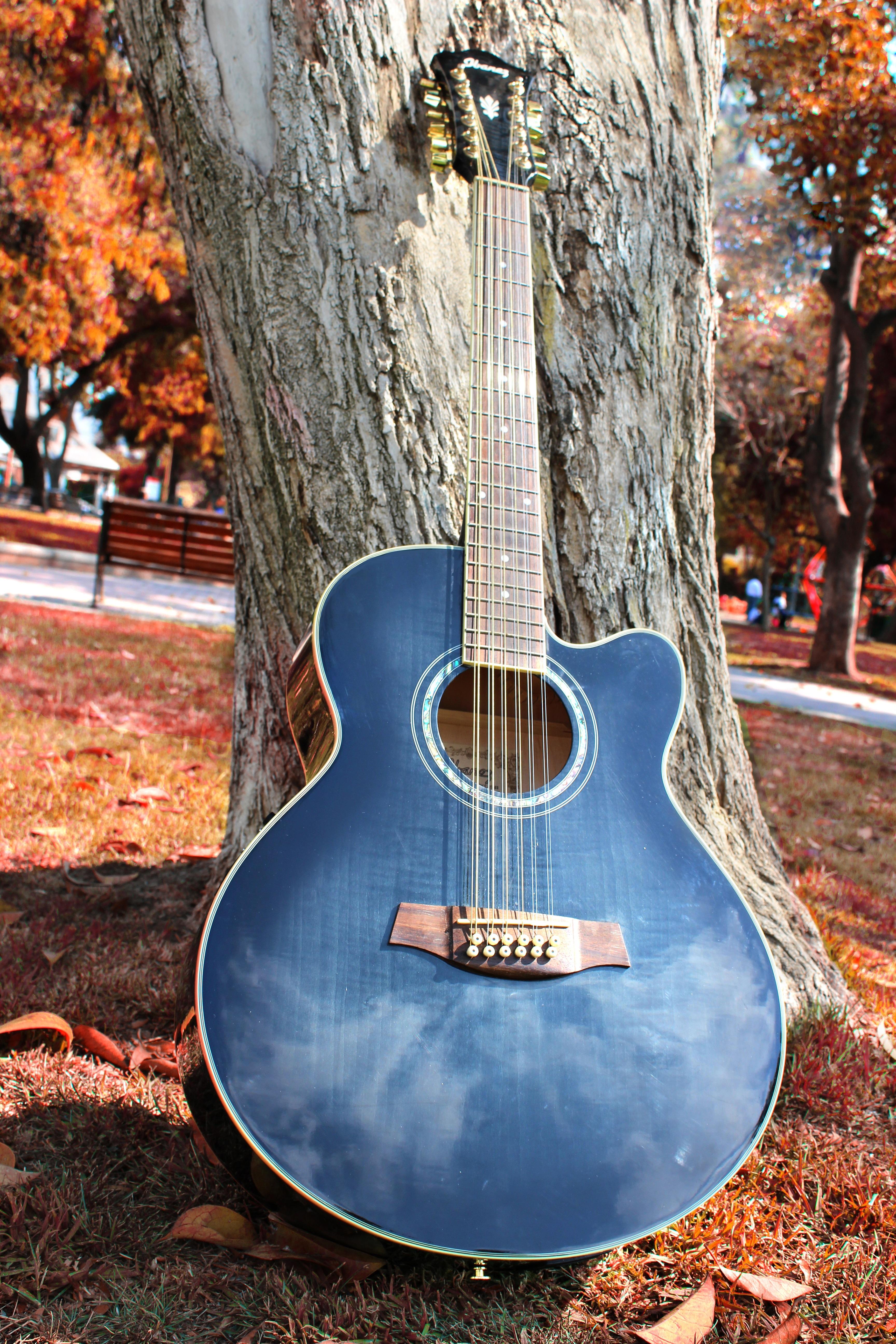 instrument basse
