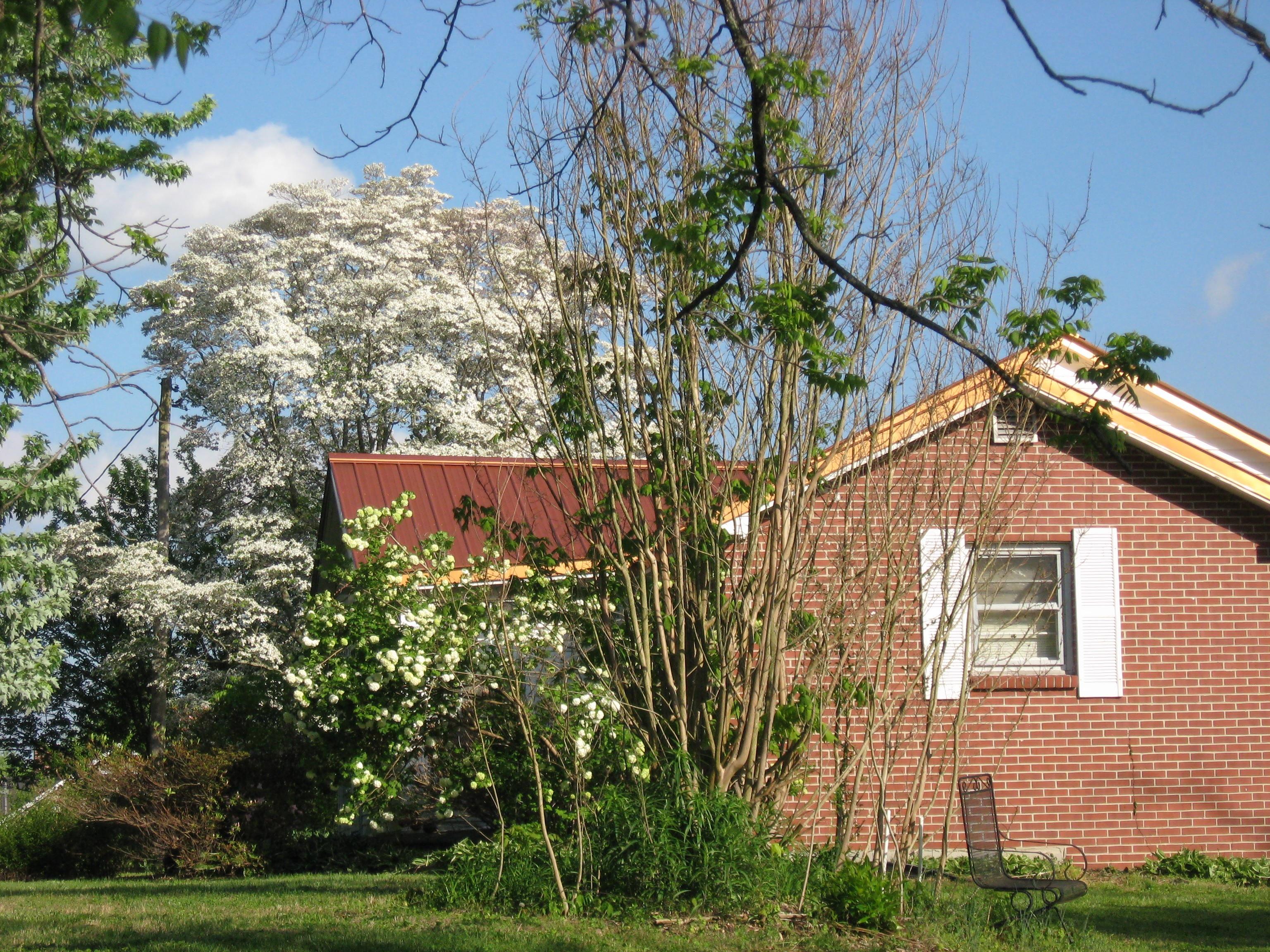 Gambar Pohon Tanah Pertanian Bangunan Desa Pondok Penglihatan Rumah Milik