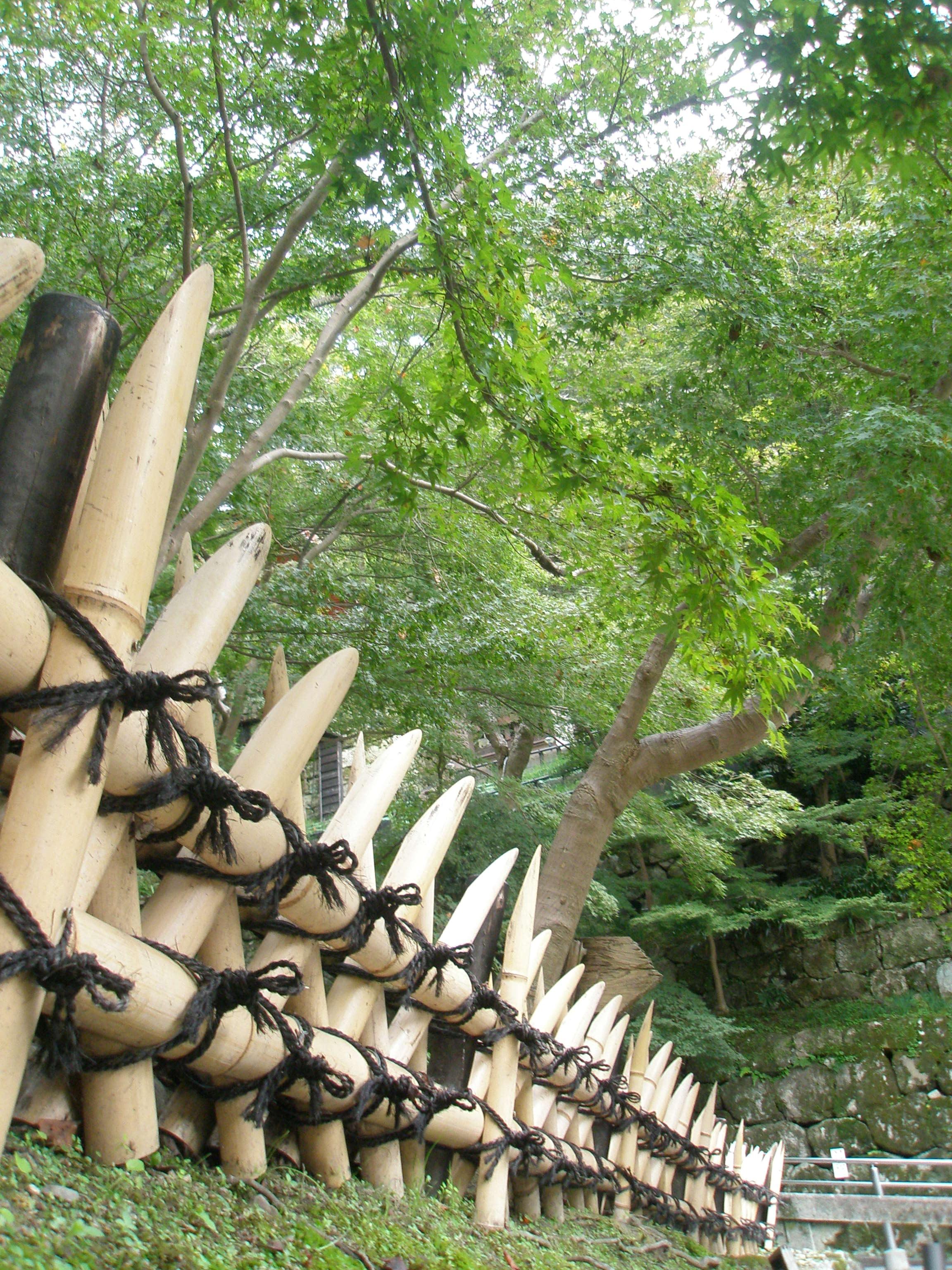 Images Gratuites : arbre, clôture, fleur, la perspective ...