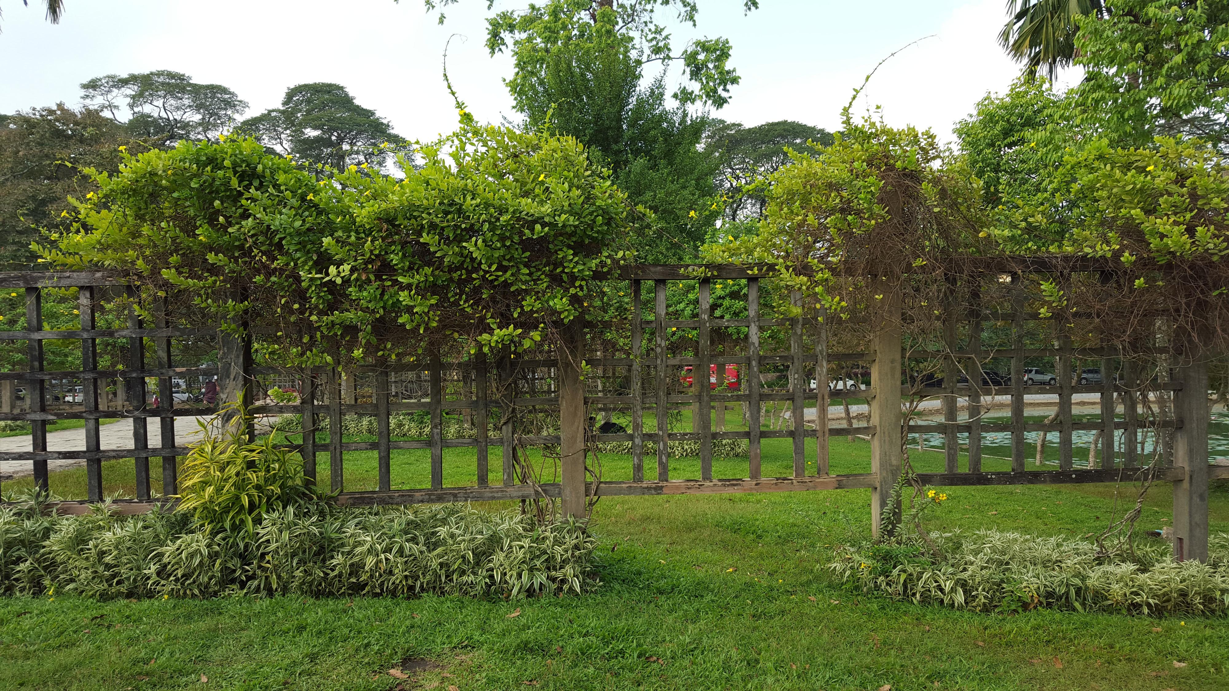 Gambar Pohon Pagar Halaman Rumput Bunga Pondok