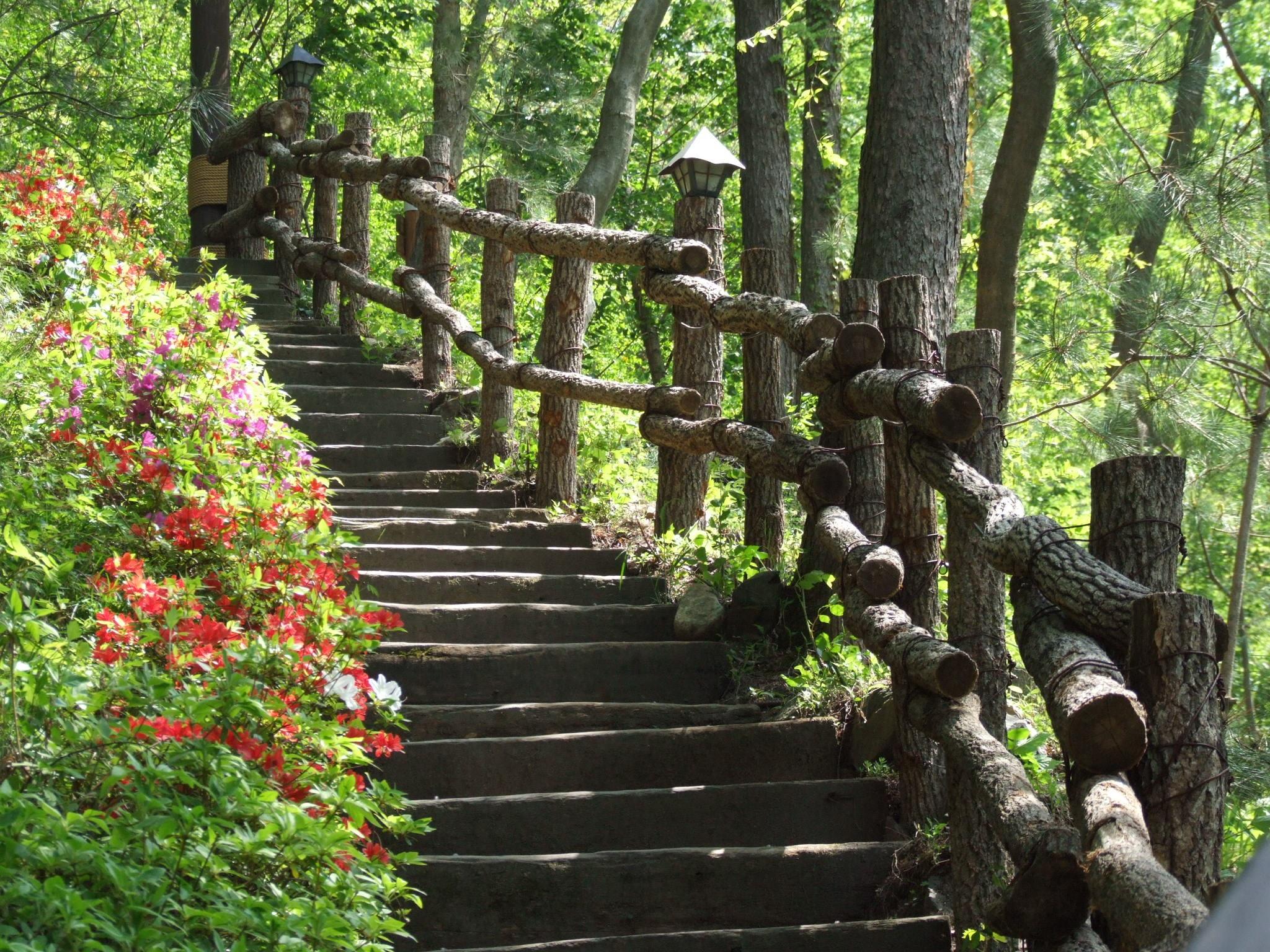 Fotos gratis rbol cerca flor oto o bot nica escalera arbusto jard n bot nico planta - Escaleras jardin ...