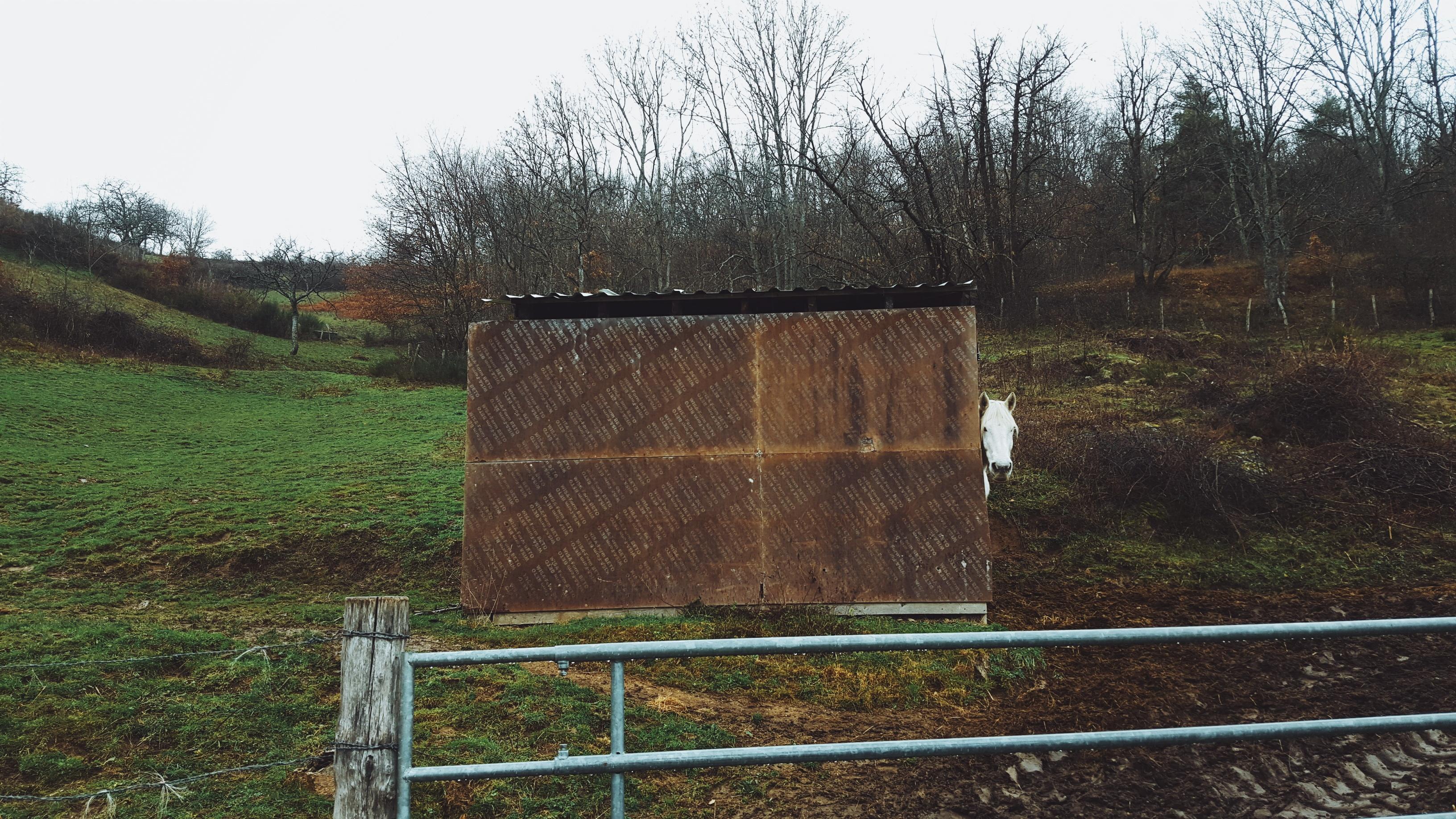 Kostenlose foto Baum Zaun Holz Bauernhof Scheune Mauer