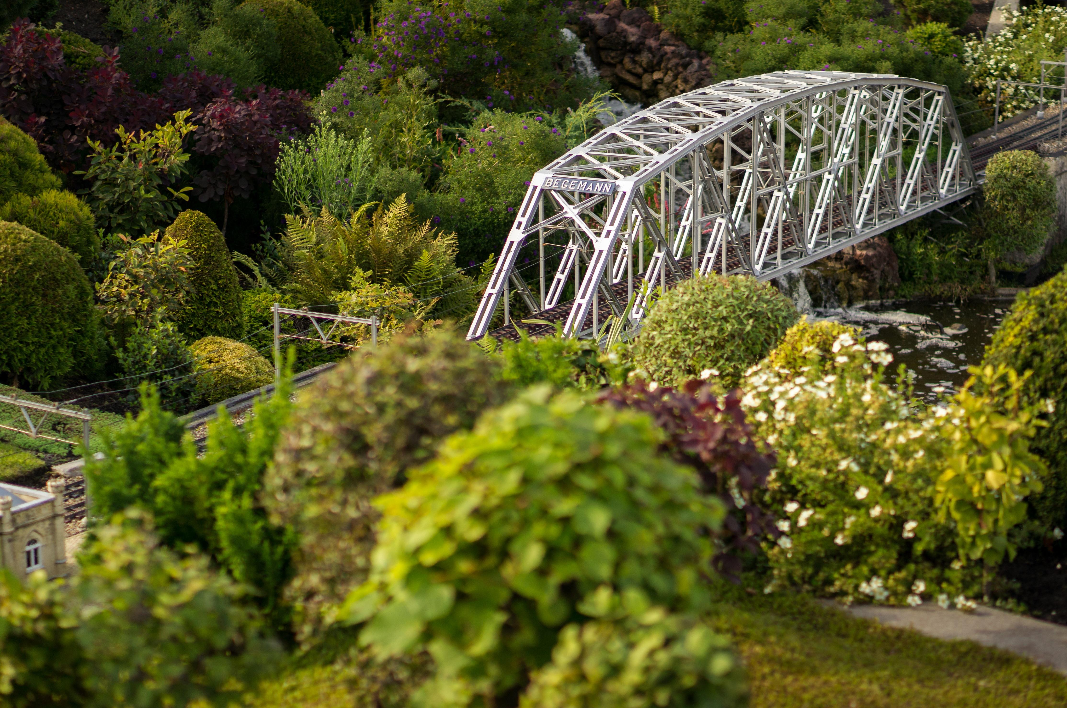Free Images : tree, flower, backyard, botany, shrub ...
