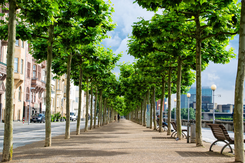 пишут картинки деревьев на улицах тому воздушный фильтр