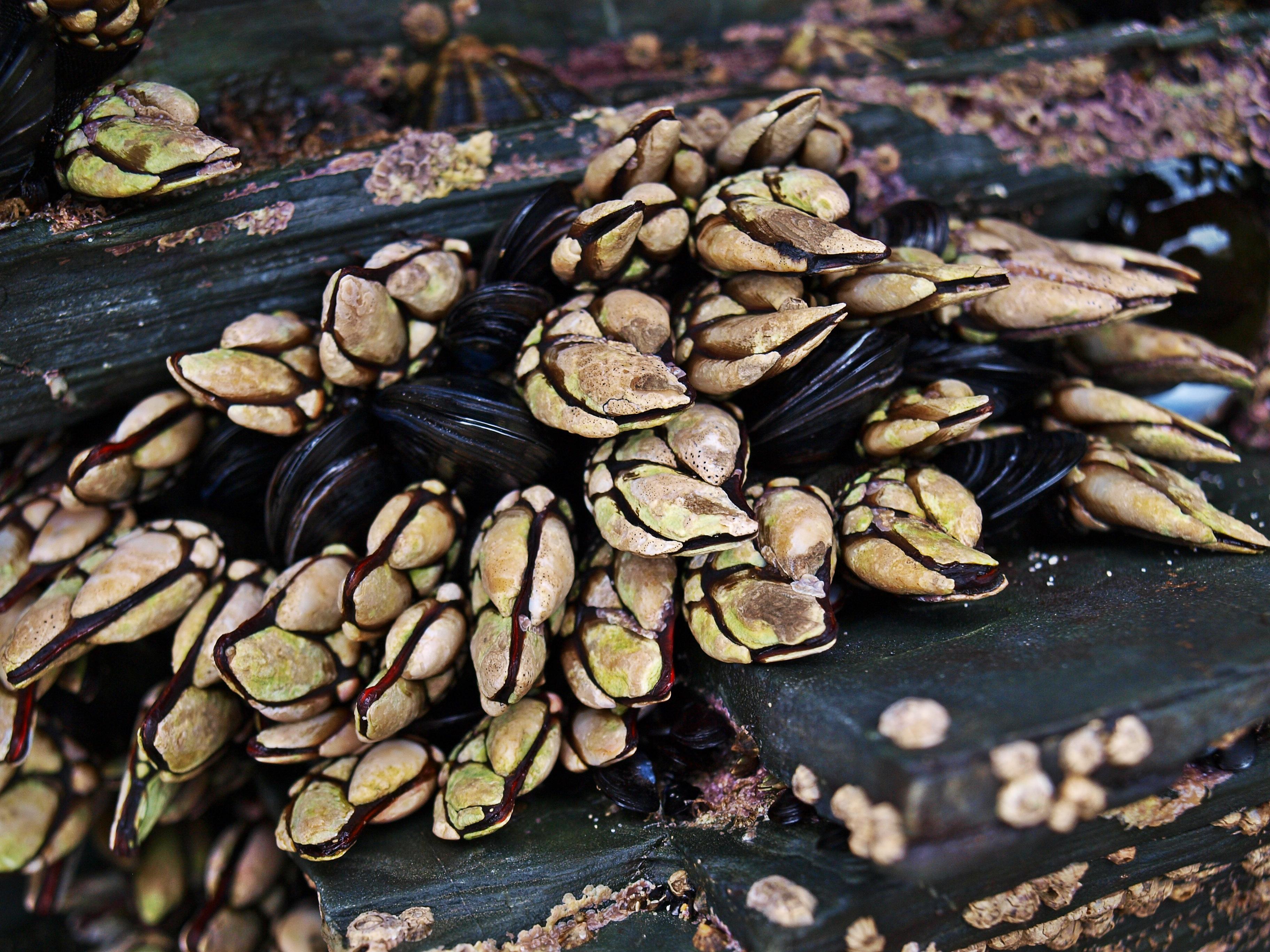 Gambar Pohon Bunga Menghasilkan Makanan Laut Remis Teritip