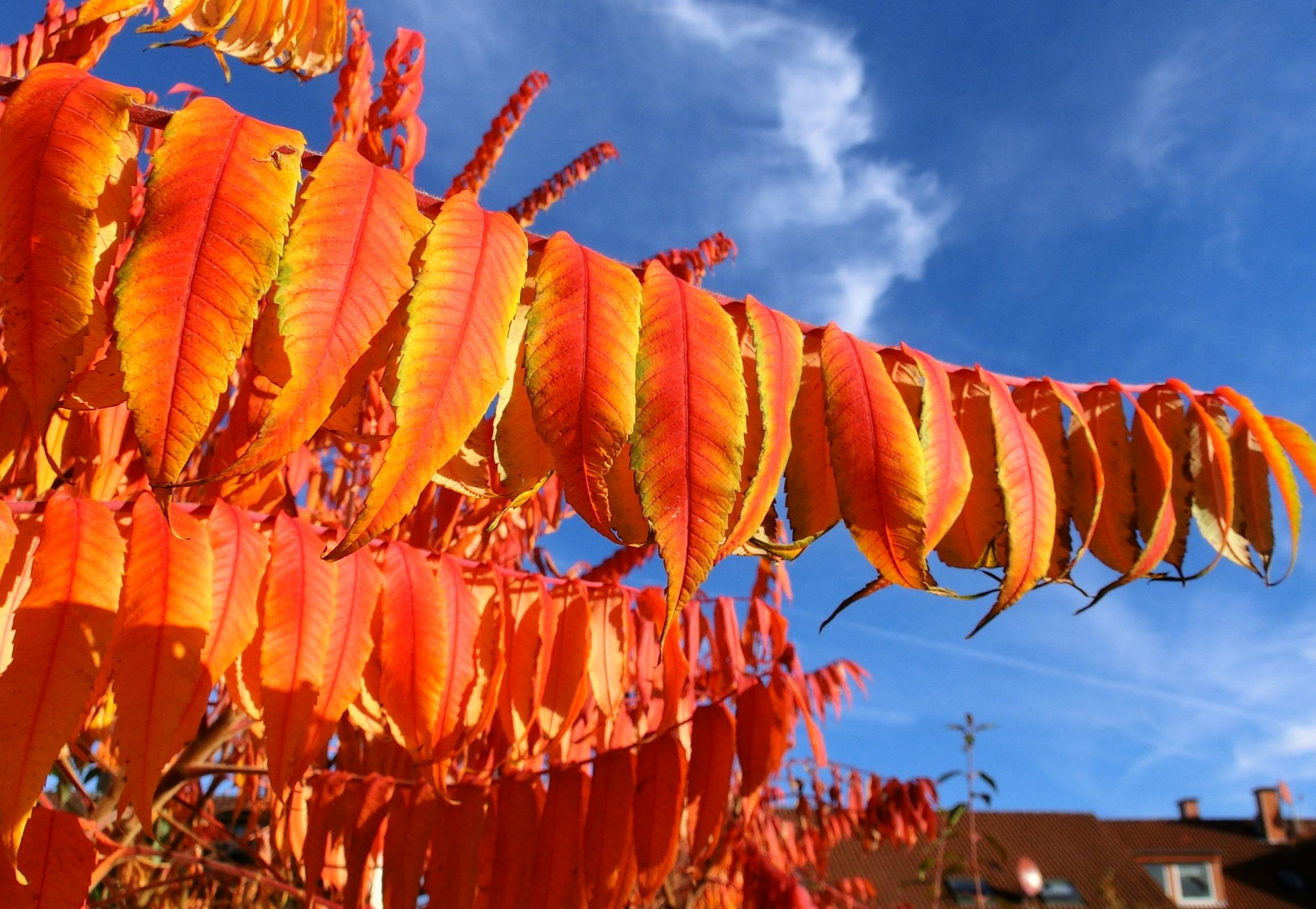 Kostenlose foto : Baum, Blume, Orange, rot, Herbst, bunt, Gelb ...