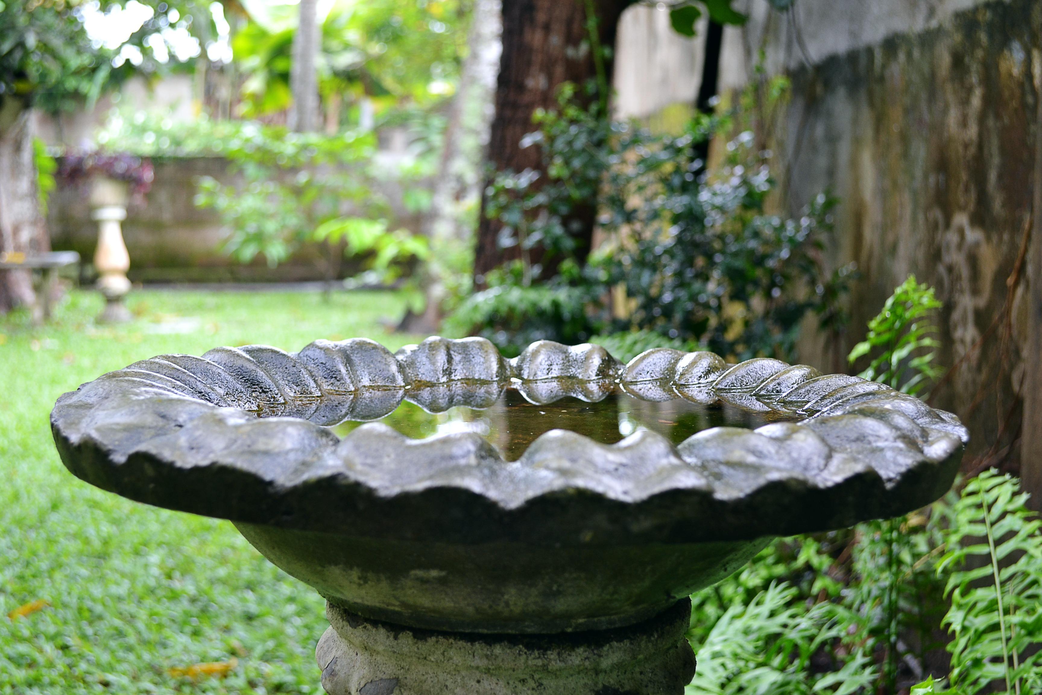 Images gratuites arbre for t oiseau feuille fleur humide tang faune vert jungle - Baignoire oiseaux jardin ...