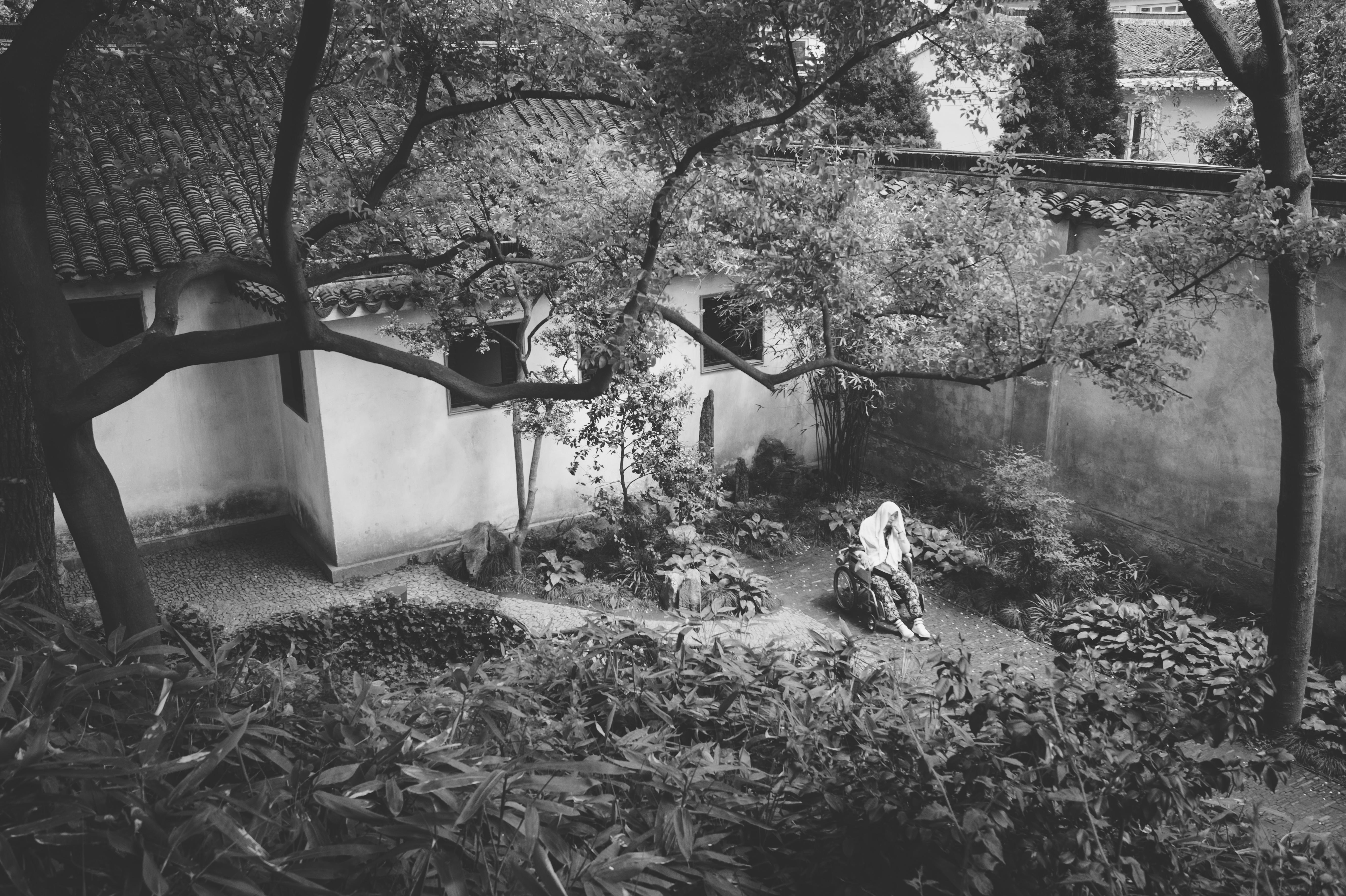 Fotos gratis rbol bosque en blanco y negro planta for Carson bosque y jardin