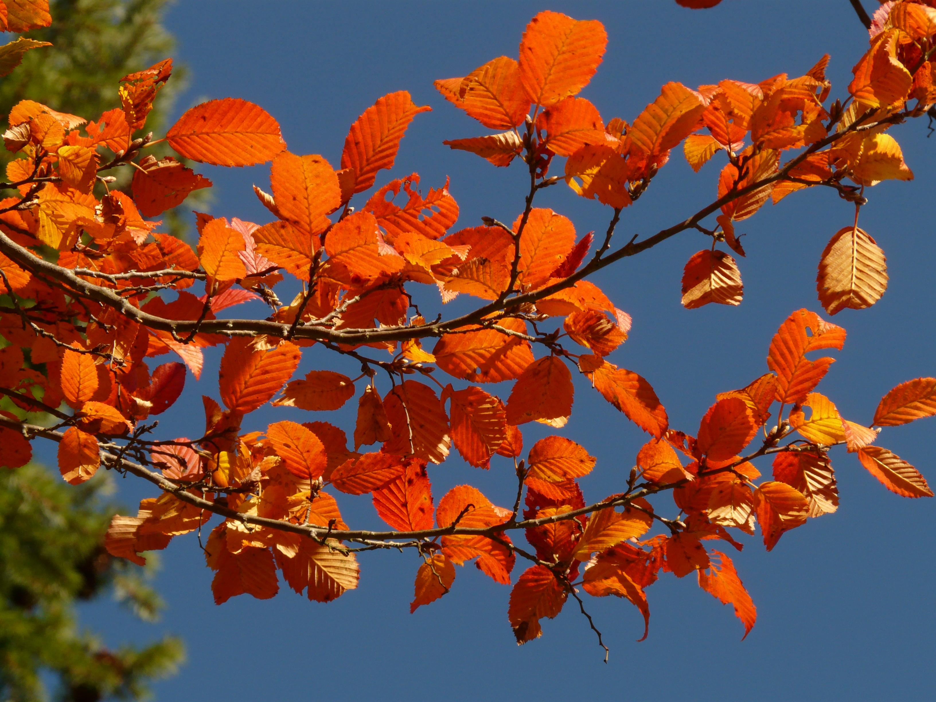 сделать осенние листья и деревья фото минусы