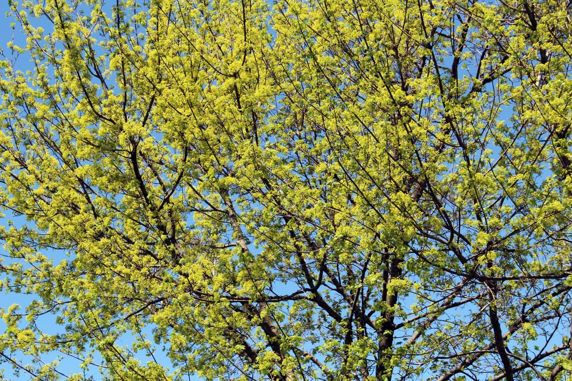 Fotos gratis : bosque, rama, flor, hoja, florecer, primavera ...