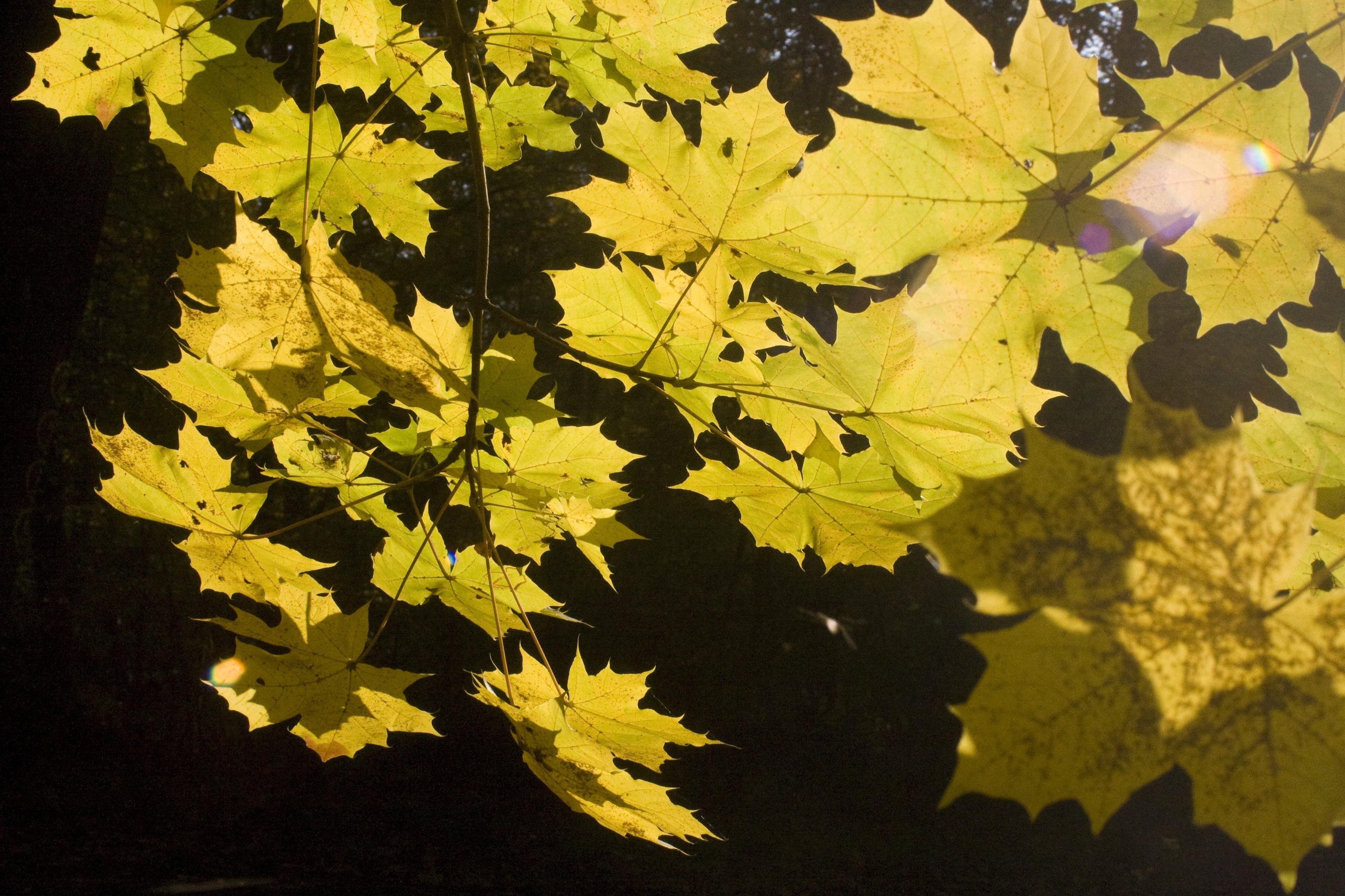 Célèbre Images Gratuites : arbre, forêt, branche, livre, lumière du soleil  BI73