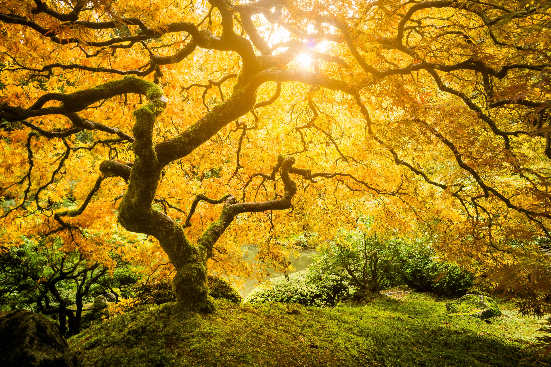 the tree of life stream deutsch