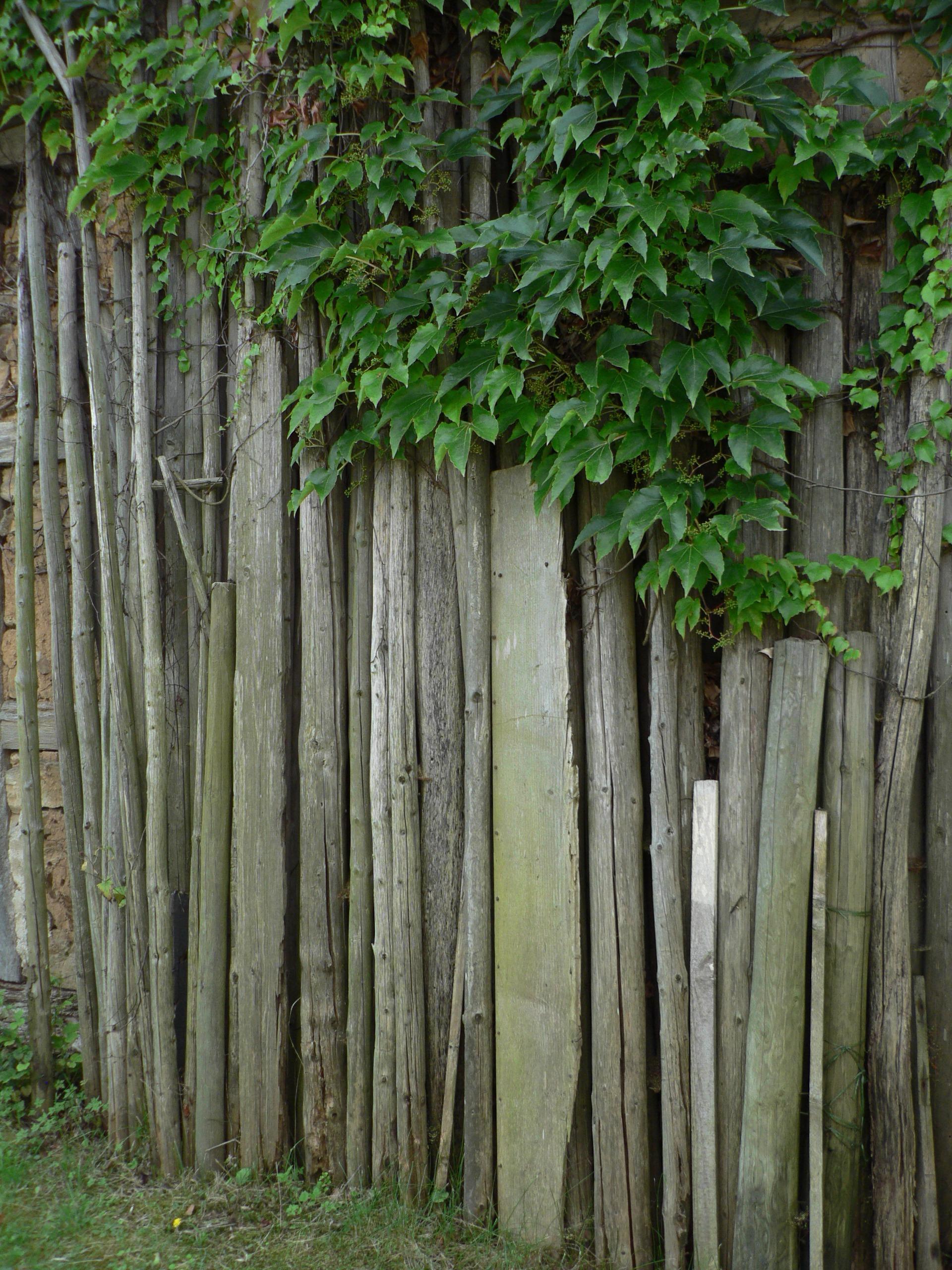 Kostenlose foto Baum Wald Ast Zaun Holz Blatt Blume